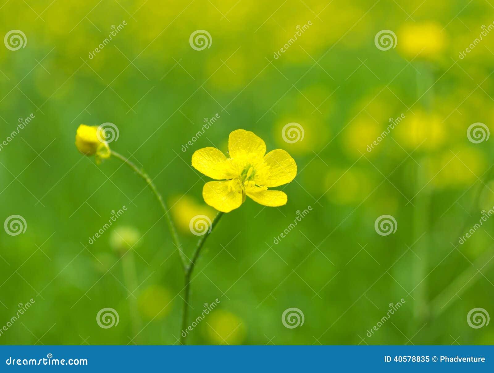 желтый цвет весны лужка одуванчиков предпосылки полный