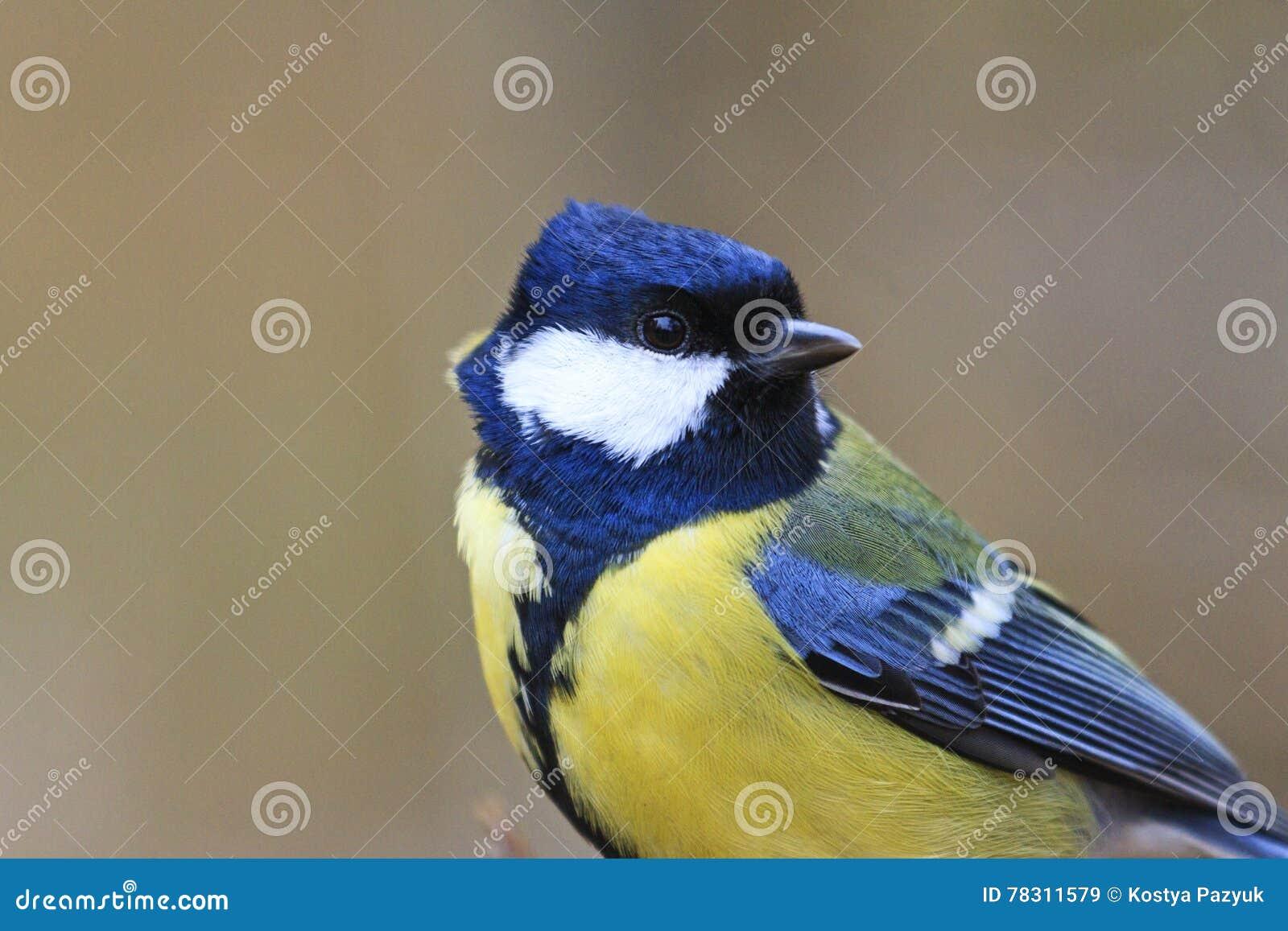 Желтый цвет и чернота битника птицы