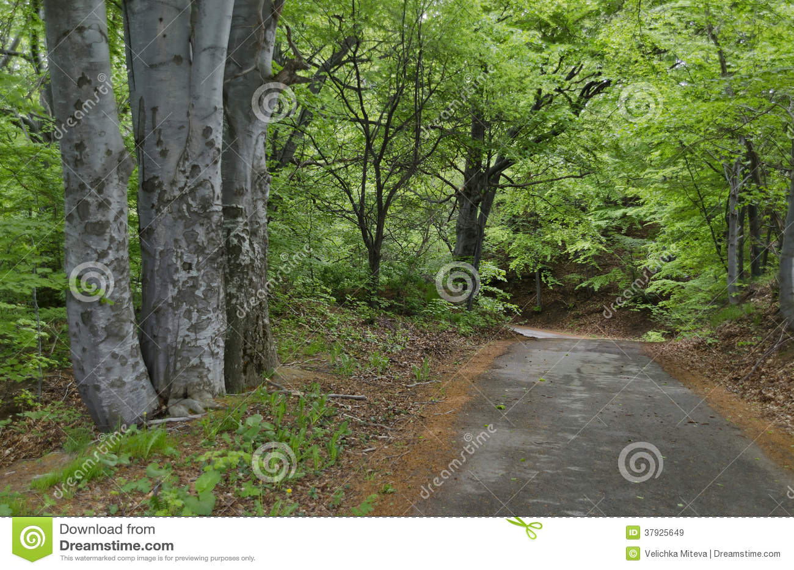 Живописные лес и дорога