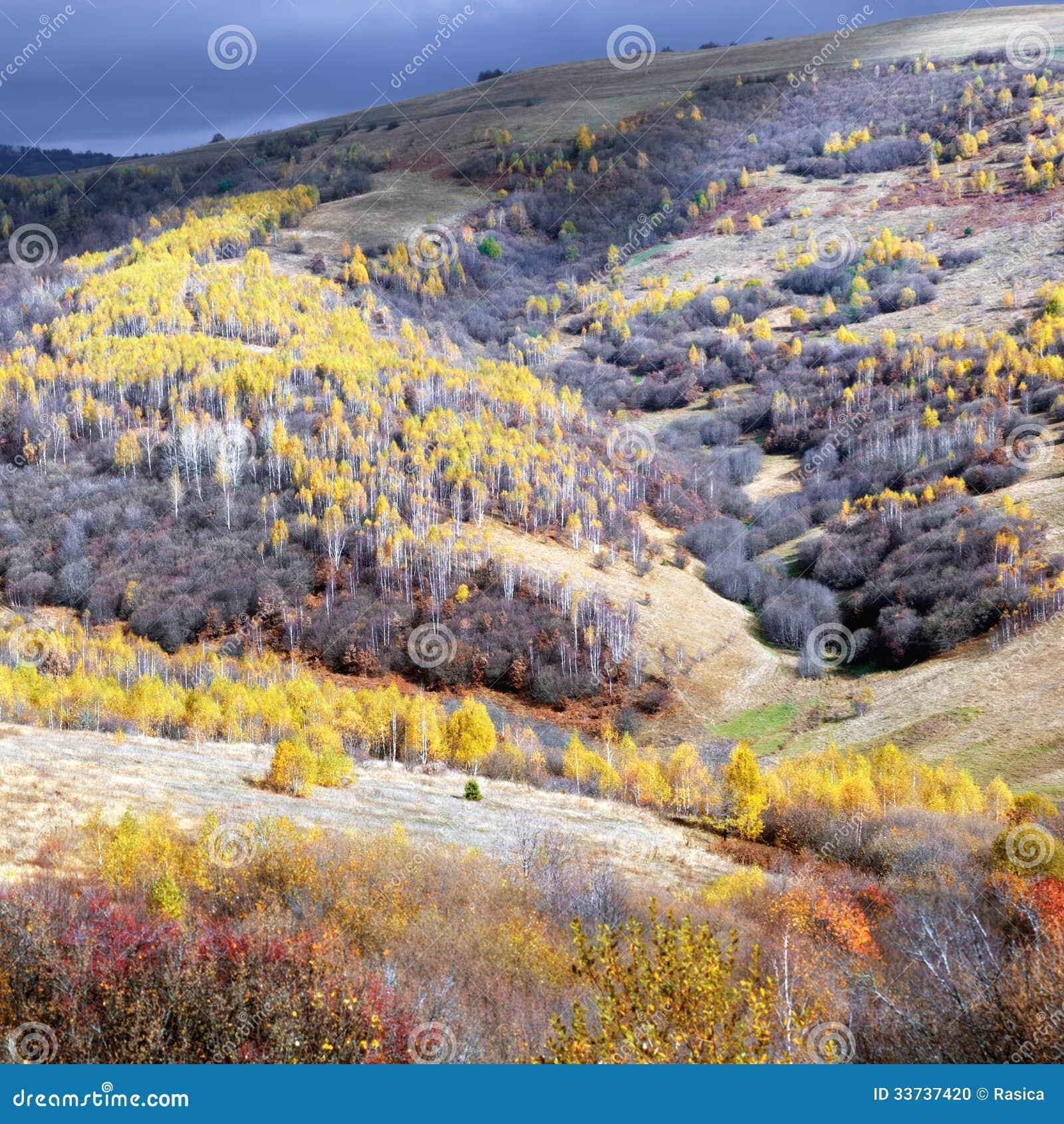 Живописный ландшафт с деревьями в последней осени