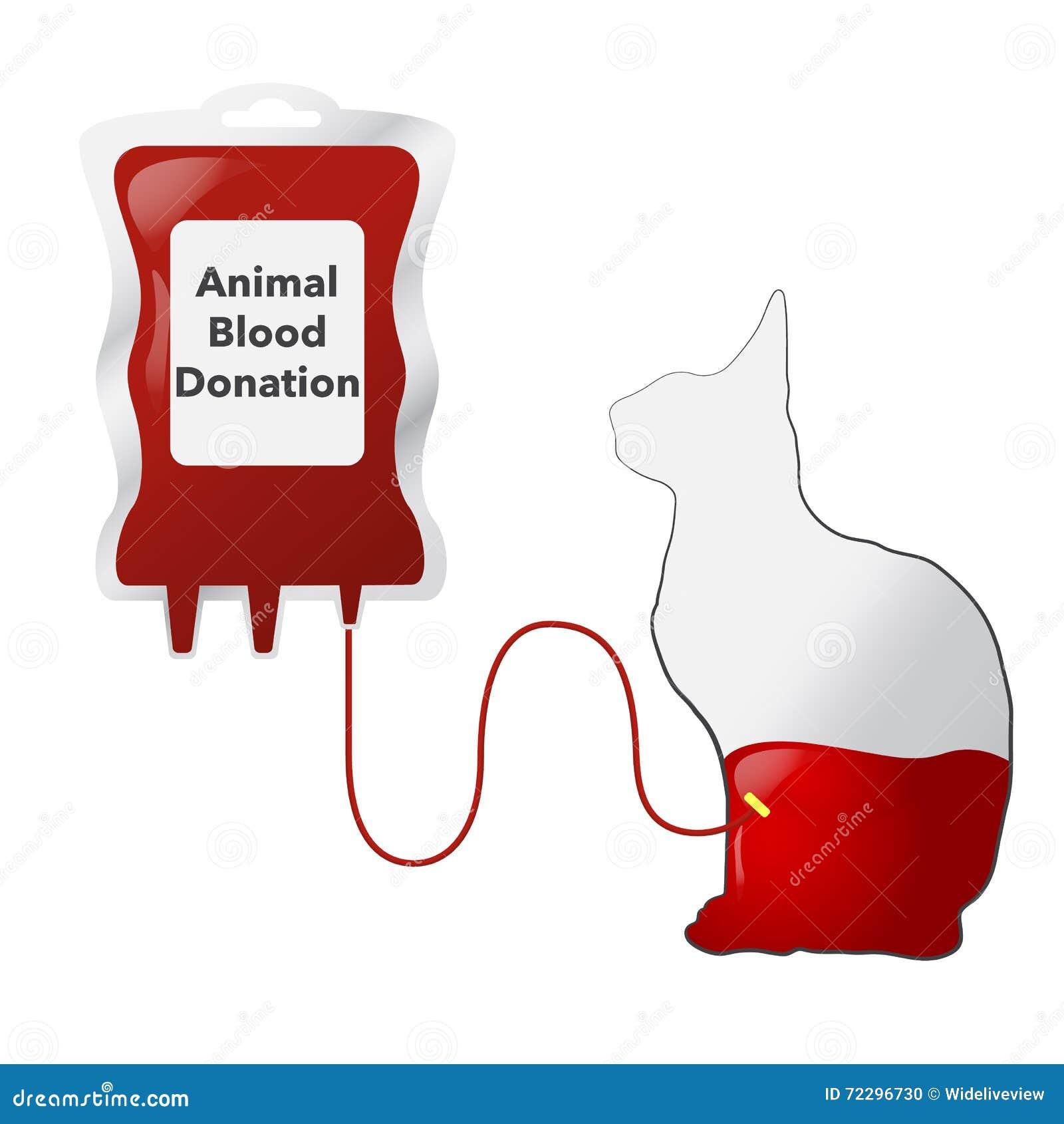 Download Животная концепция донорства крови с Dripper и котом, Illus вектора Иллюстрация штока - иллюстрации насчитывающей агрохимическим, кот: 72296730