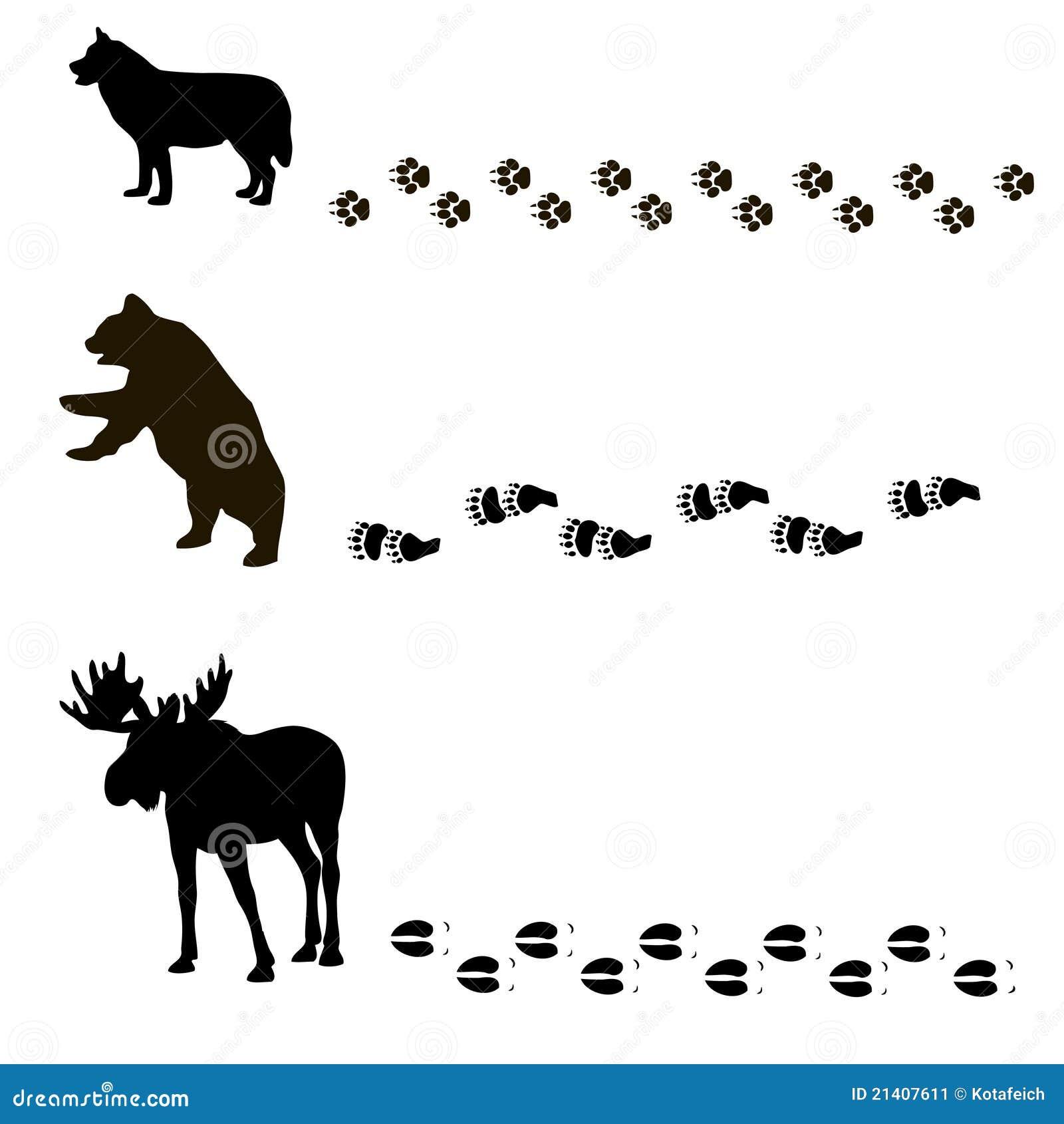 Изображения животные их следы