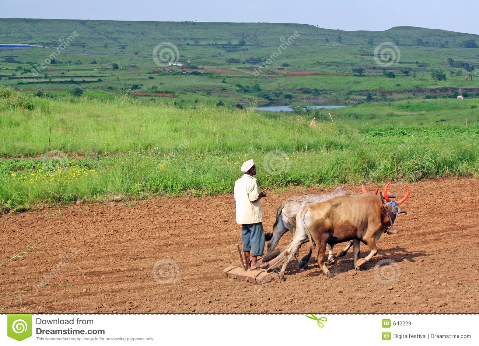 Download животным пахать земли хуторянина приведенный в действие Plough Стоковое Изображение - изображение насчитывающей lifestyle, angoras: 642229