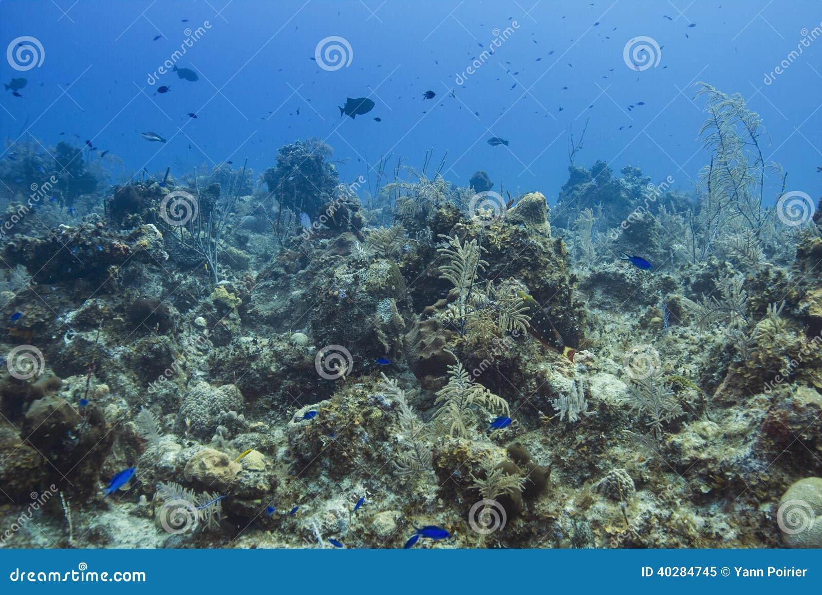Живущий океан