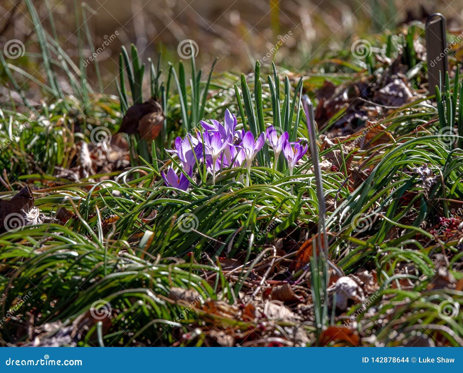 Живые пурпурные цветки на поле леса