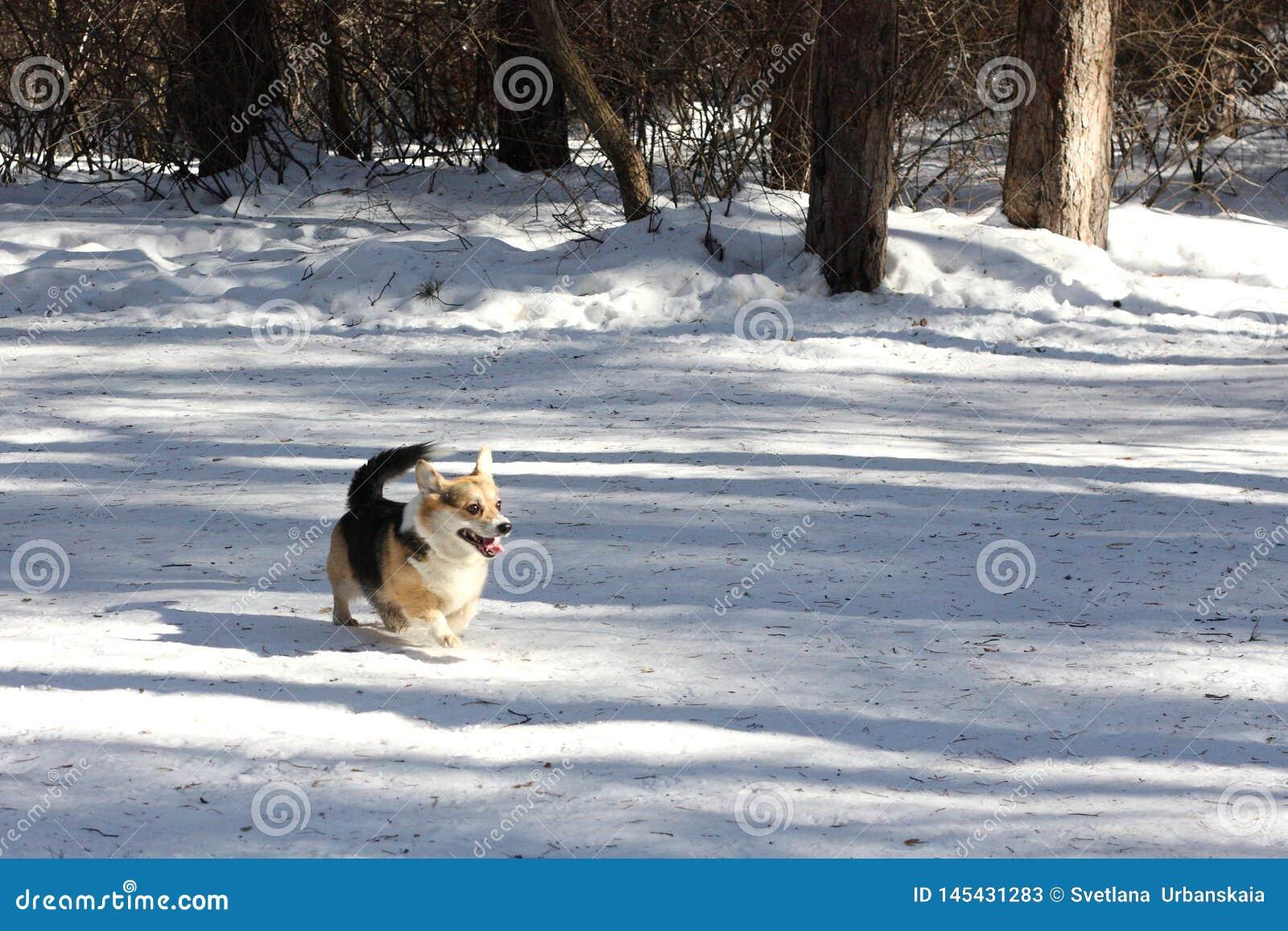 Собака в парке зимы