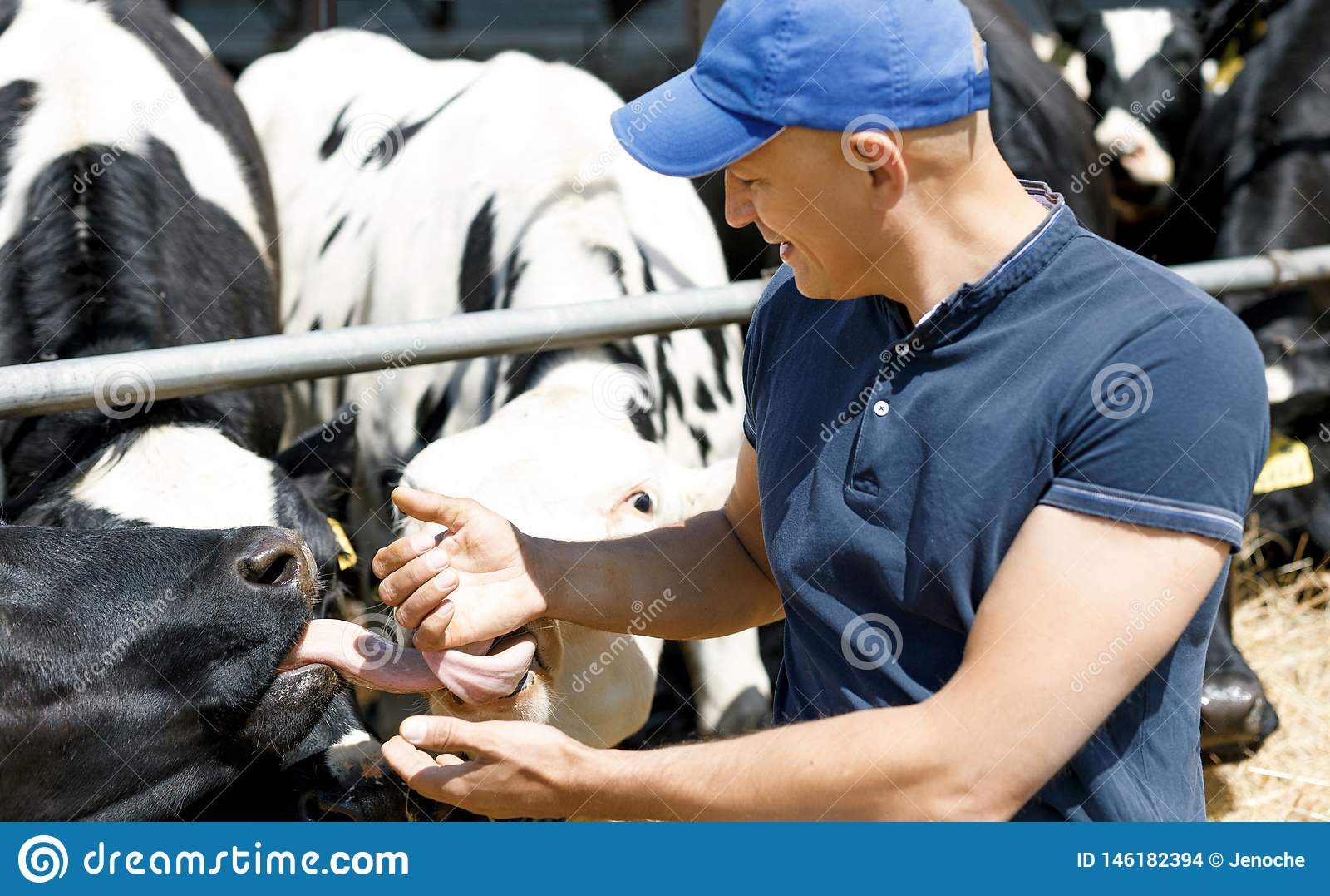 Жизнерадостный фермер окруженный коровами на ферме