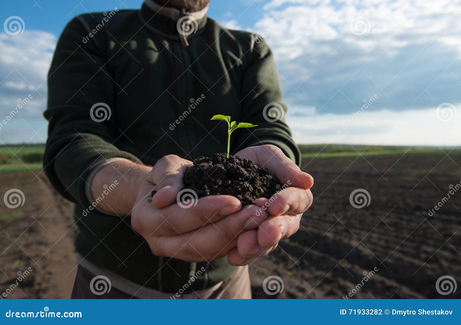 жизни удерживания руки хуторянина консервации детеныши символа завода относящой к окружающей среде свежей новые жизнь новая