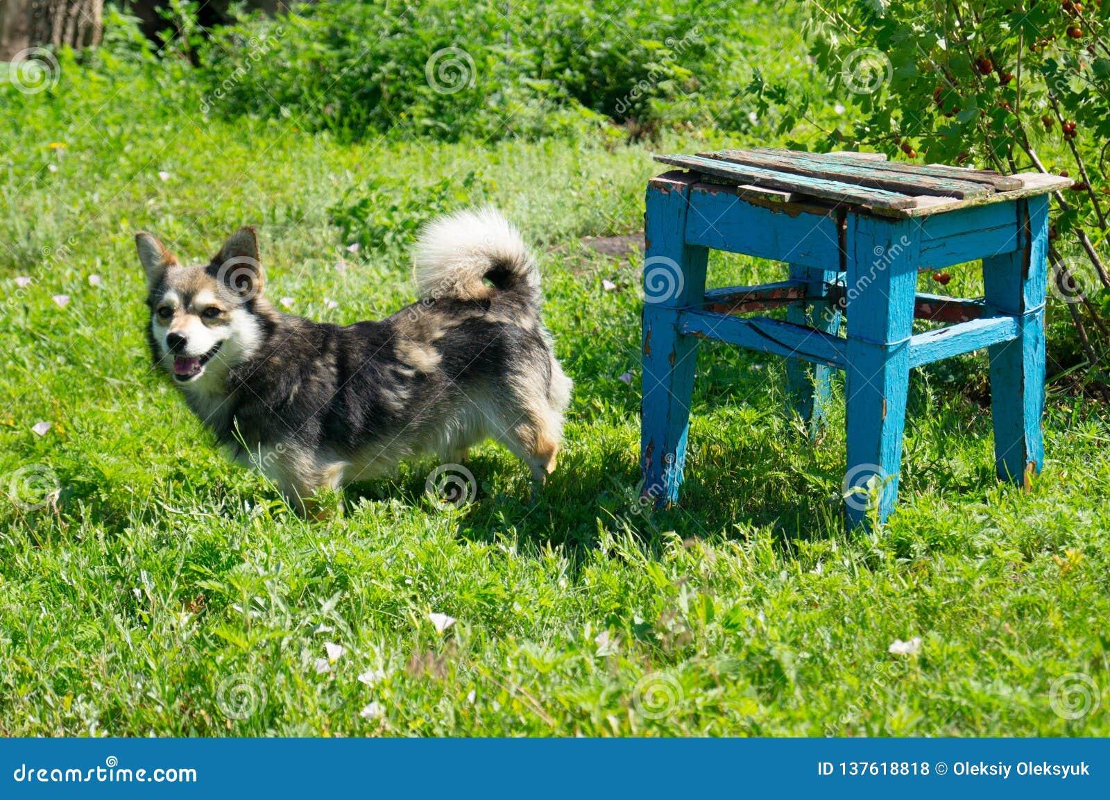 жизнь котенка коровы страны кота Маленький любимчик Украина