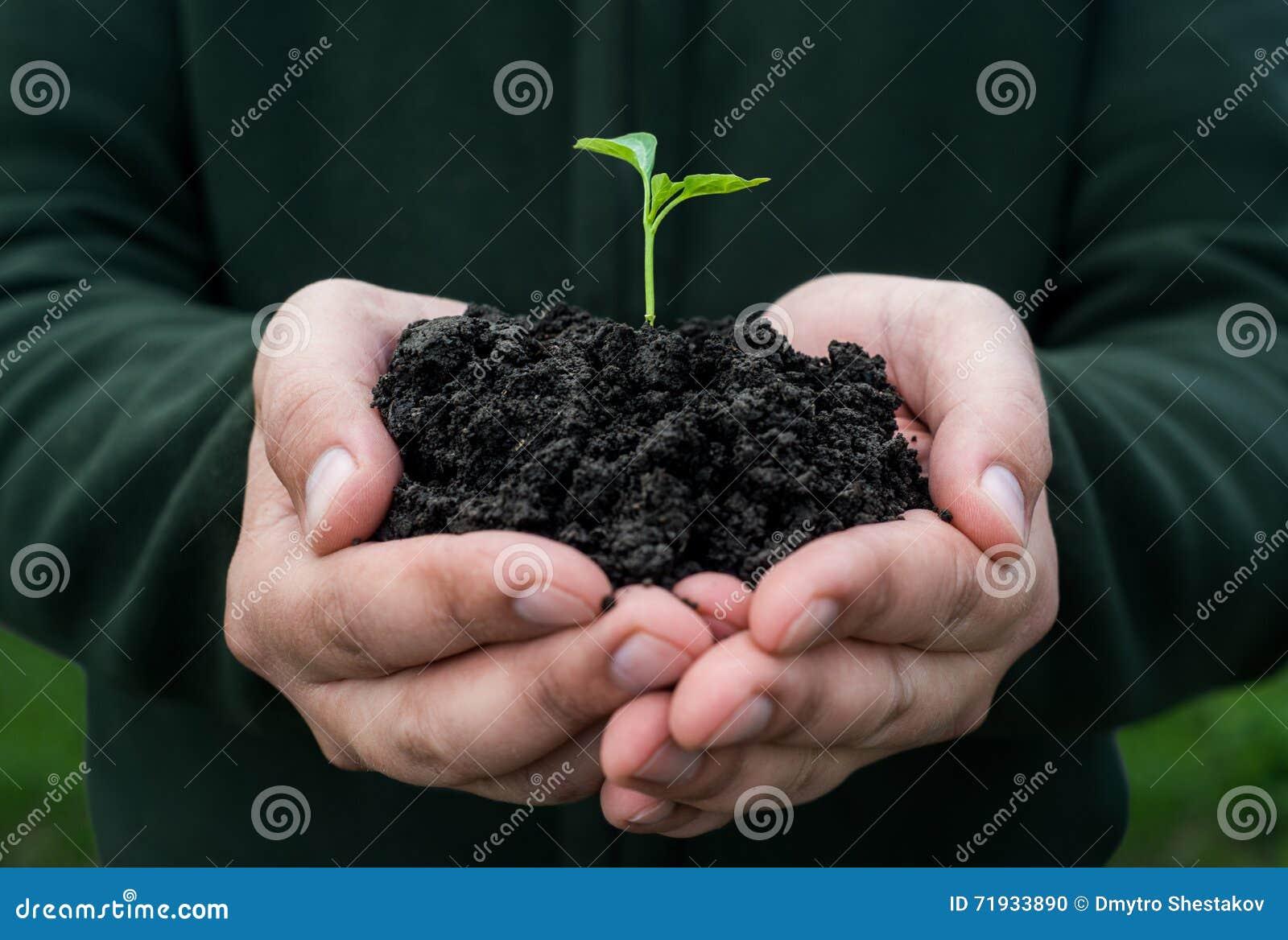 жизнь новая жизни удерживания руки хуторянина консервации детеныши символа завода относящой к окружающей среде свежей новые