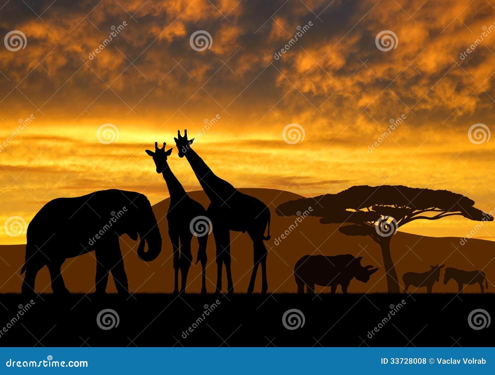 Жирафы, слон и носорог