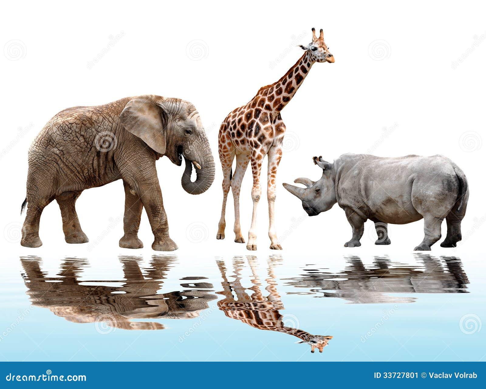 Жираф, слон и носорог
