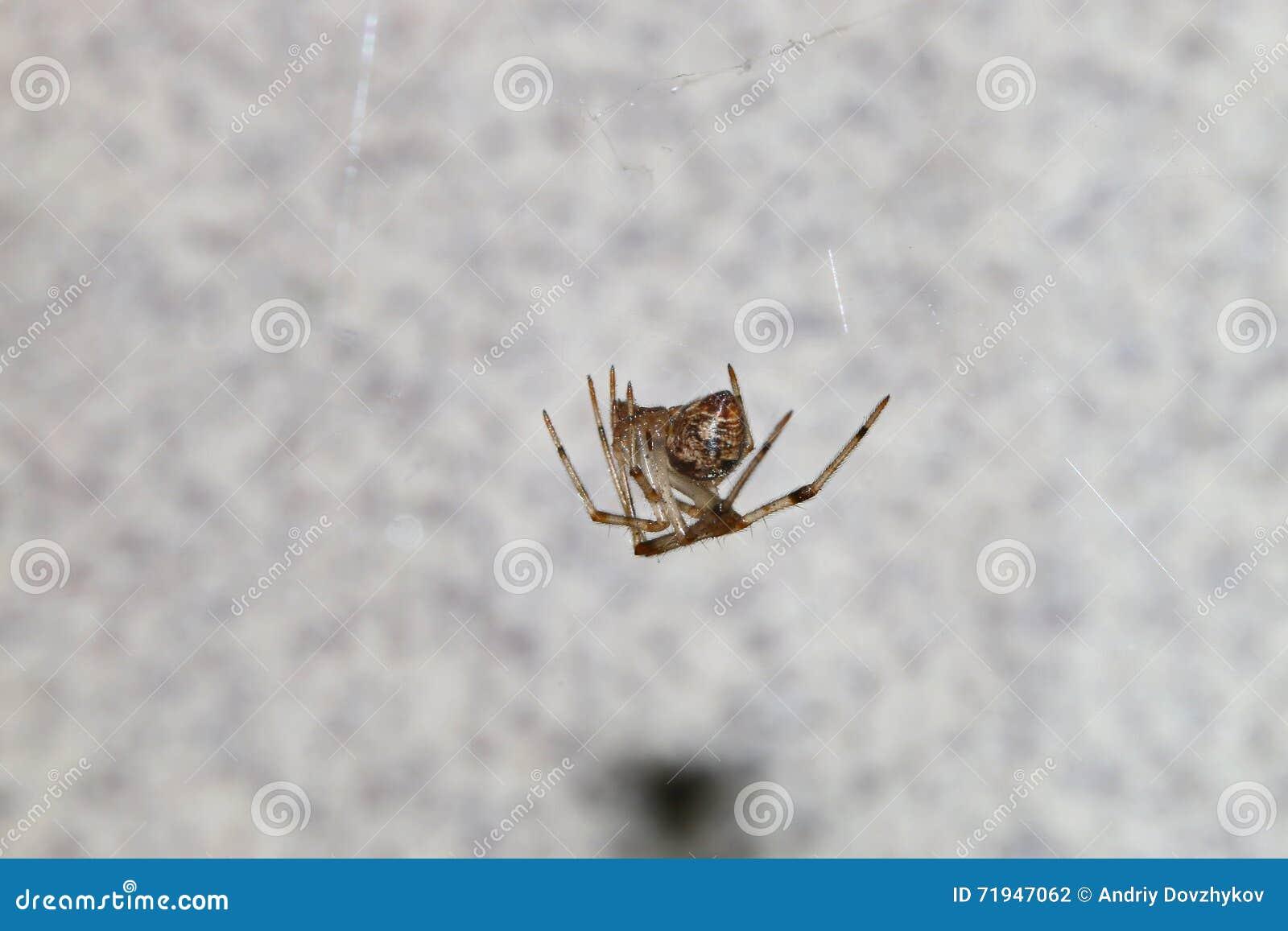 Жуки, пауки, насекомые