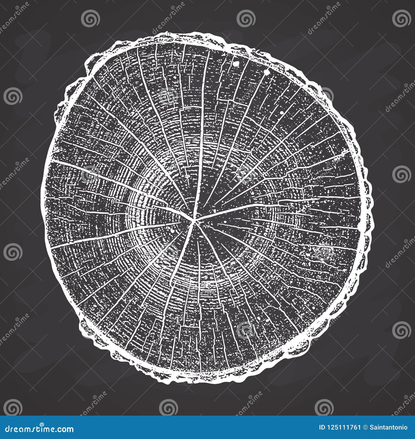 Журнал дерева, деревянная иллюстрация вектора текстуры grunge годичных колец на предпосылке доски