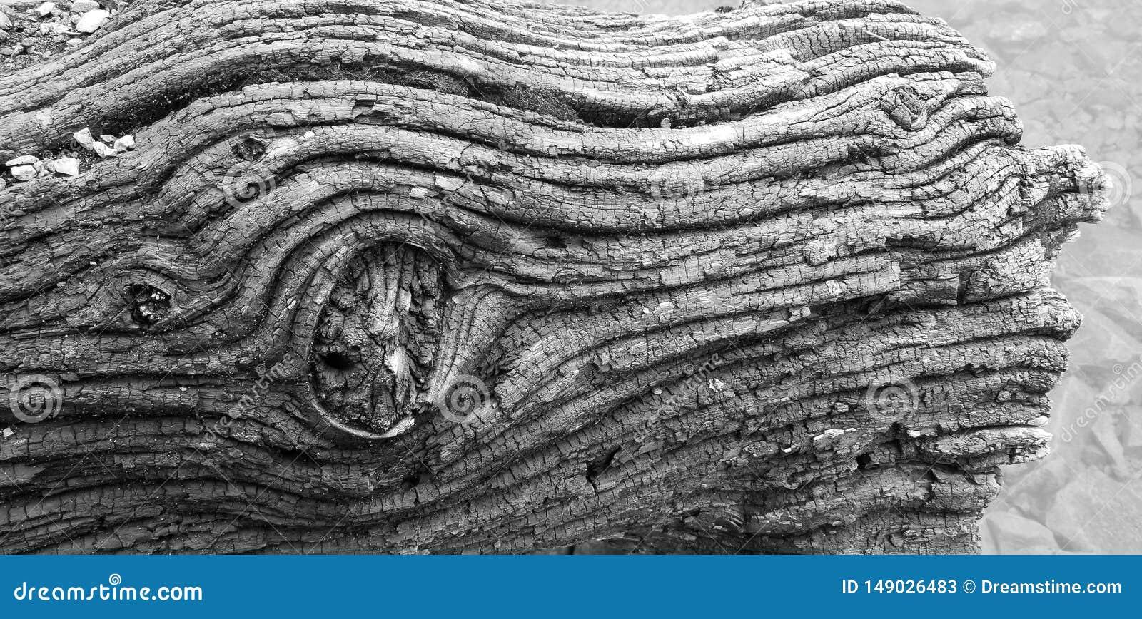 Журнал текстуры древесины смещения