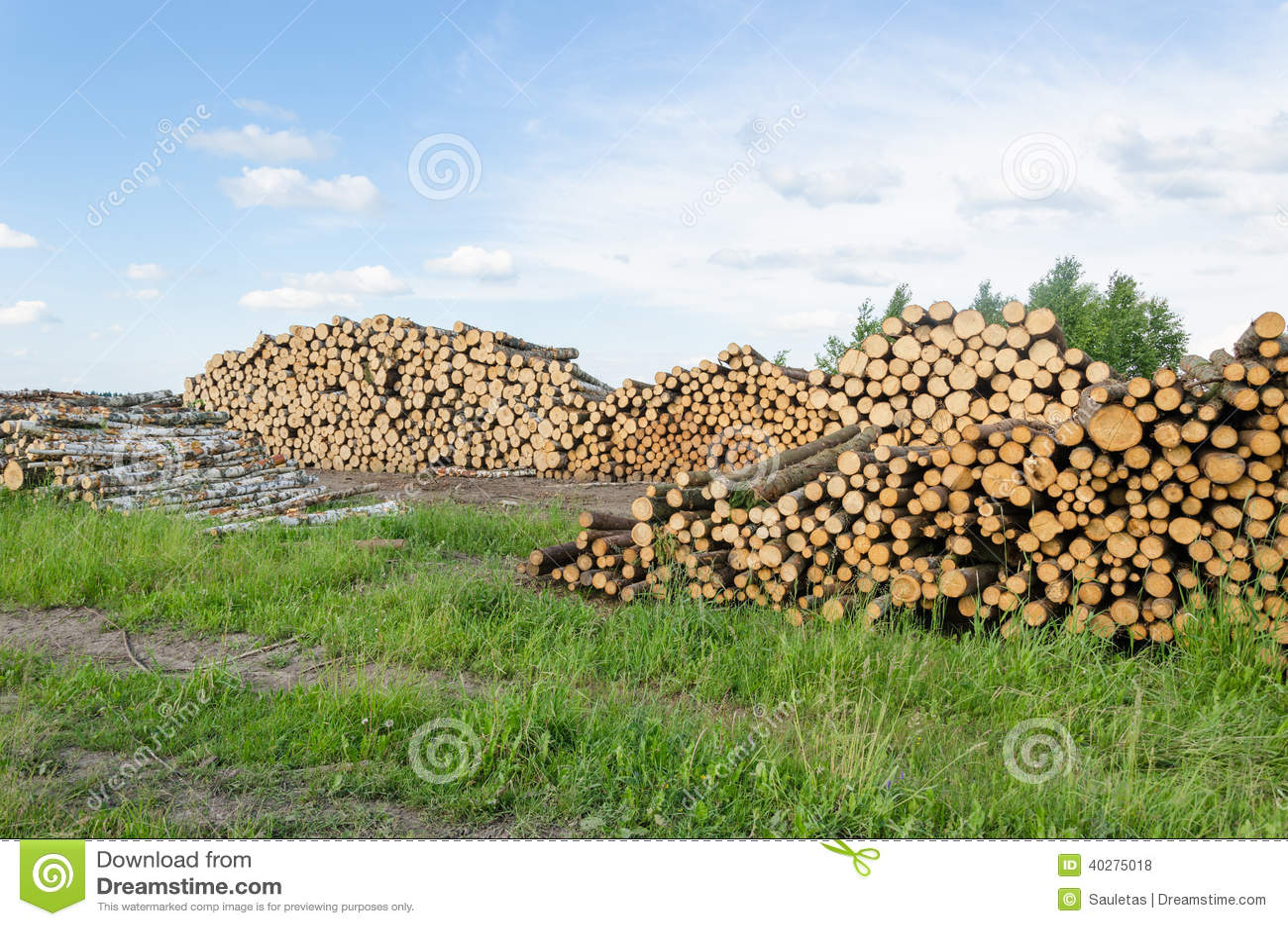 Журналы березы и сосны топлива швырка штабелируют лес