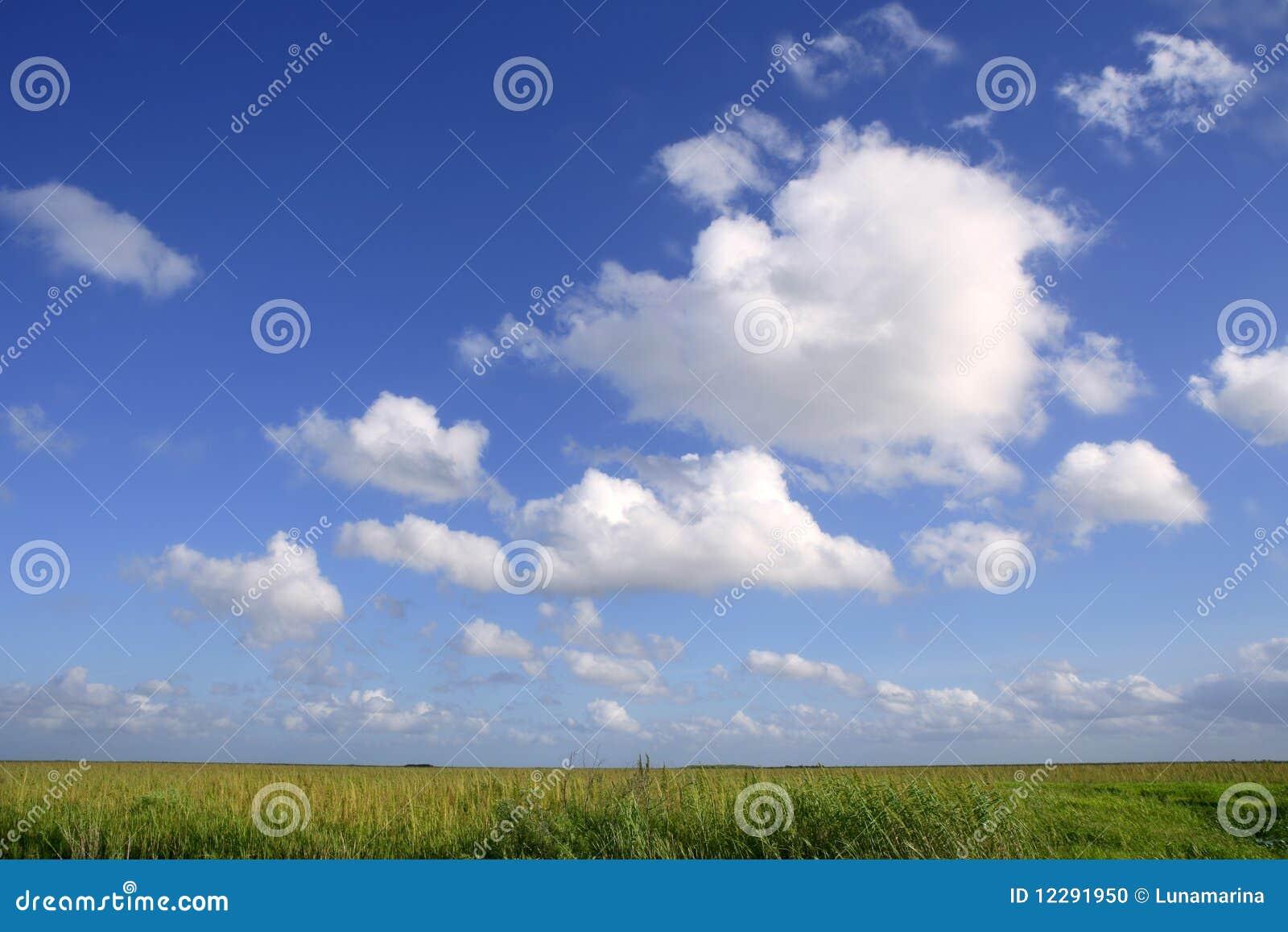заболоченные места неба плана florida голубых болотистых низменностей зеленые