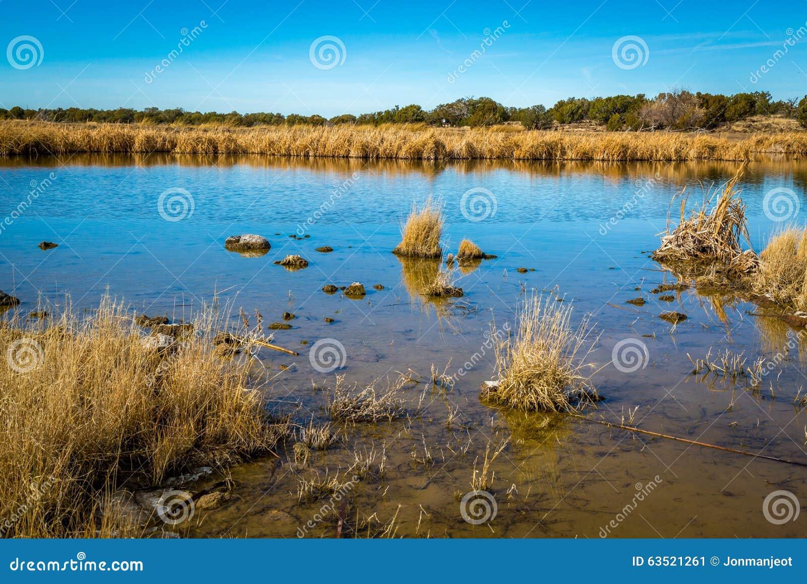 Заболоченные места Аризоны и животный заповедник riparian