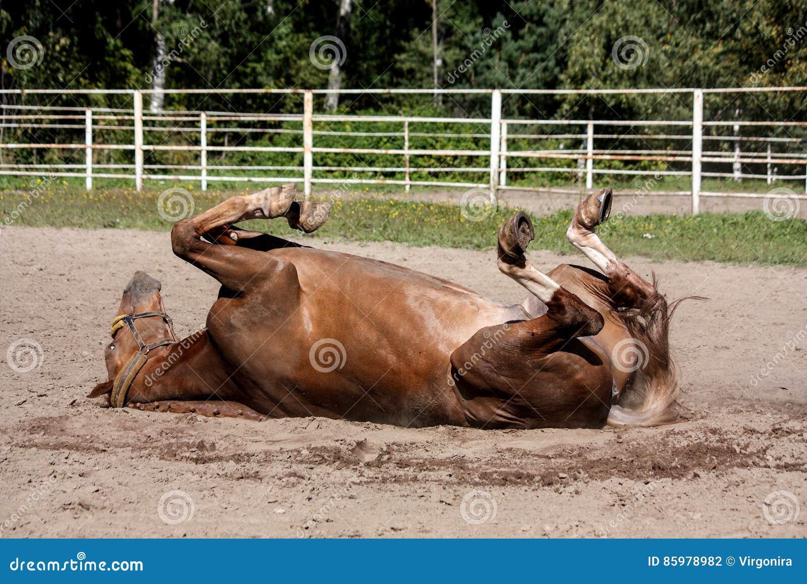 Завальцовка лошади каштана в песке