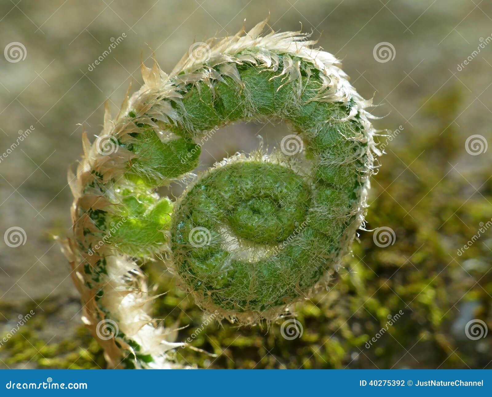 Завитое зеленое растение