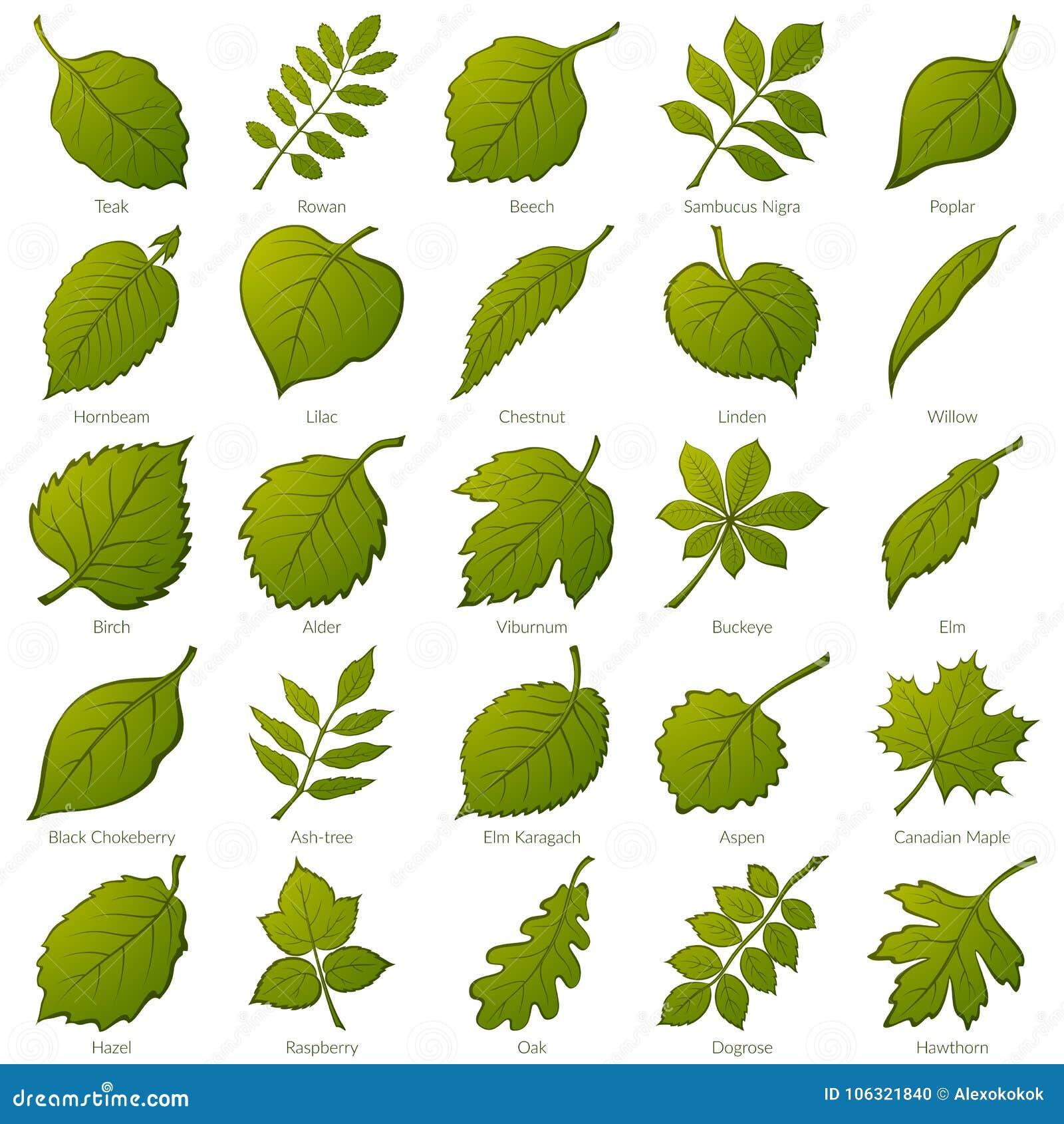 заводы листьев установили