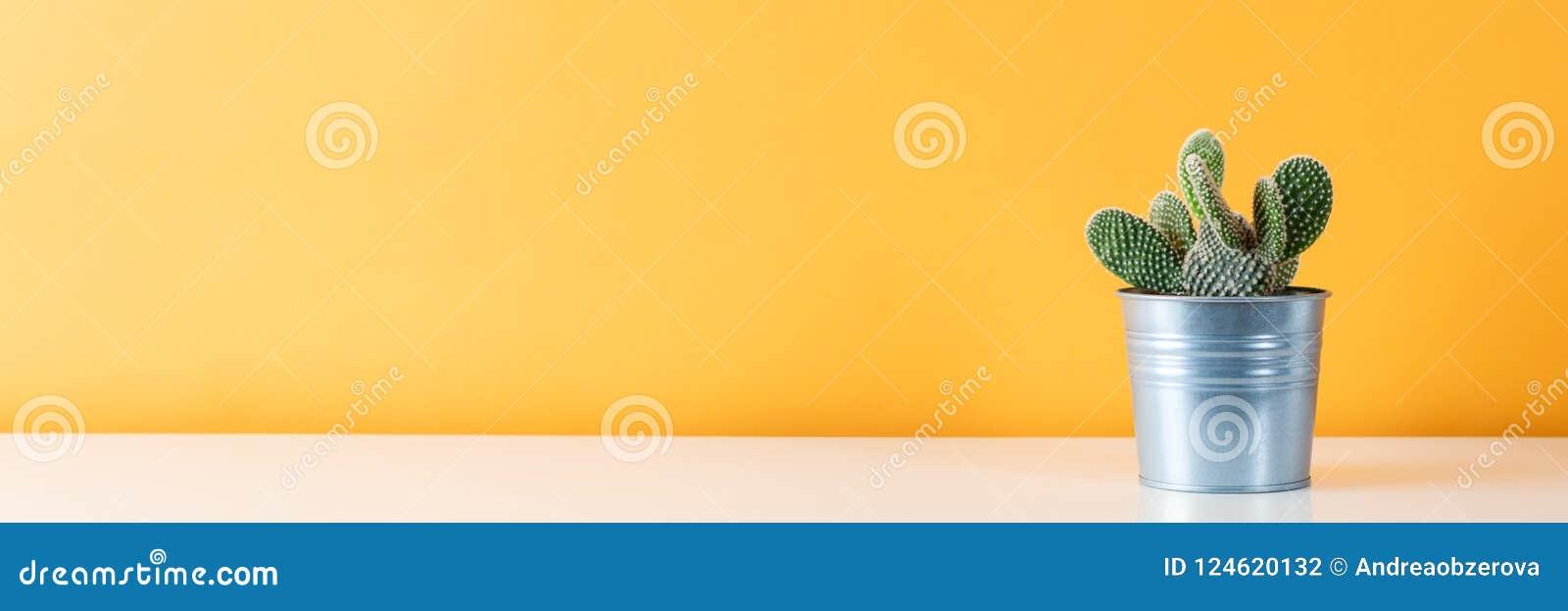 Завод кактуса в баке металла В горшке завод дома кактуса на белой полке против пастели покрасил стену Знамя кактуса