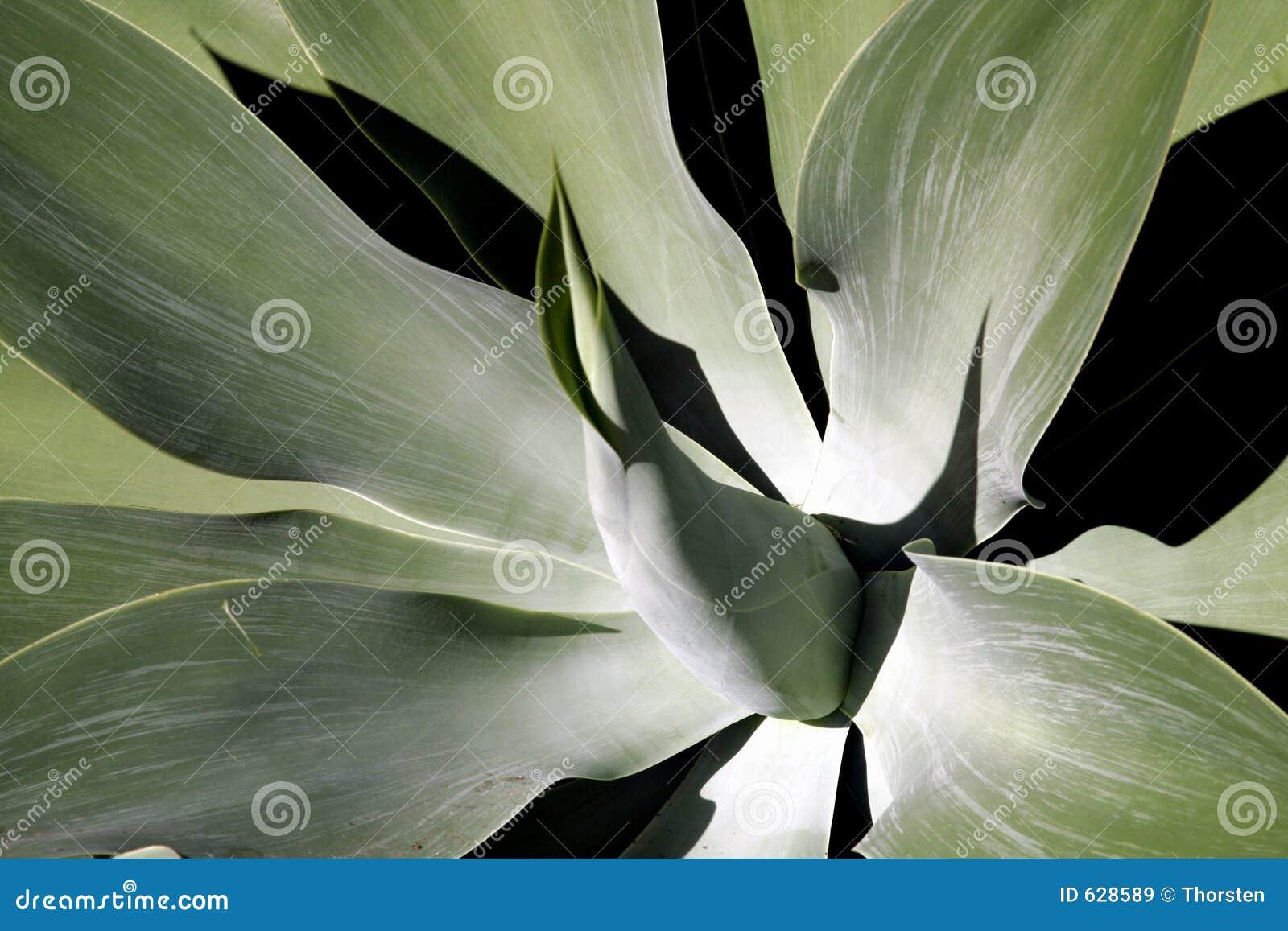 Download завод листьев мягко тропический Стоковое Изображение - изображение насчитывающей звезда, листья: 628589
