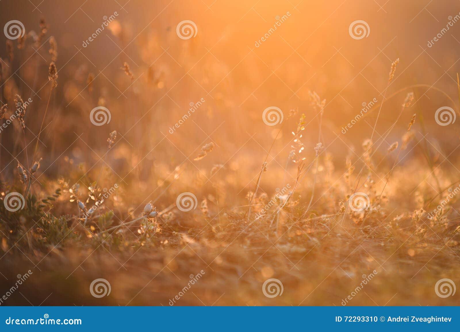 Download Заводы и трава стоковое фото. изображение насчитывающей sunset - 72293310