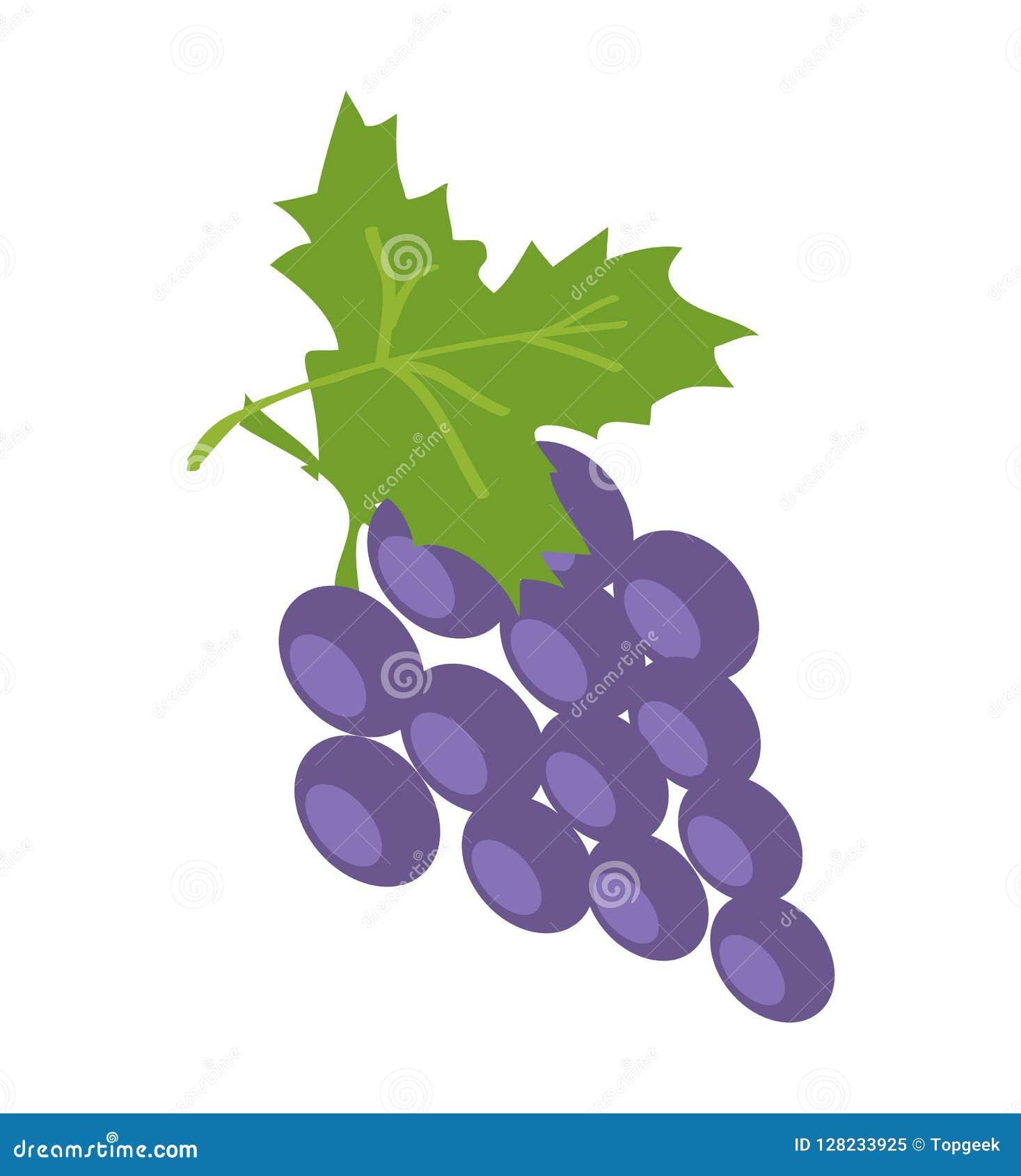 Завтрак-обед виноградины сирени, иллюстрации вектора цвета