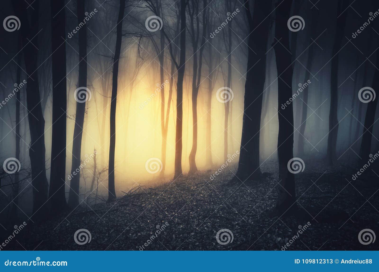 Загадочный свет в темноте преследовал лес на ноче