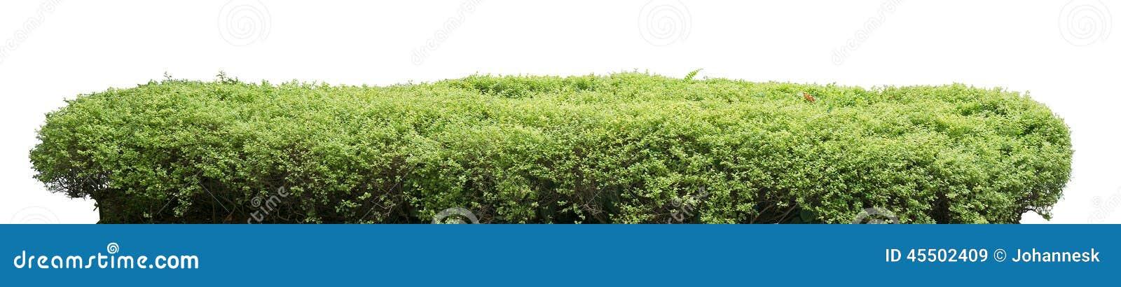 Загородка кустарника