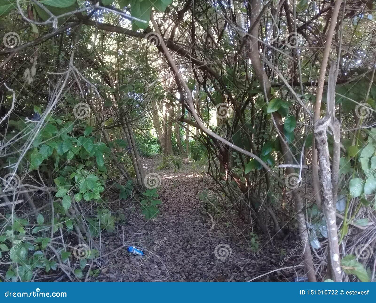 Загрязнятьая мангрова с пластмассой в Бразилии