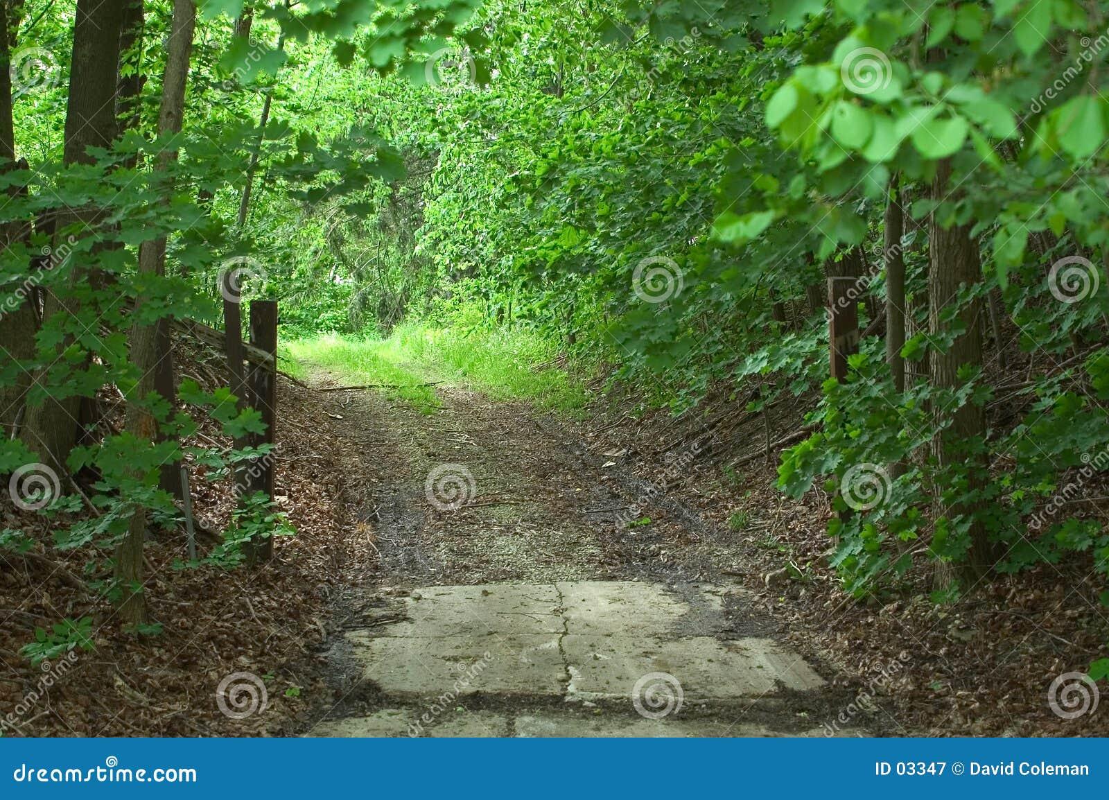 задние древесины дороги