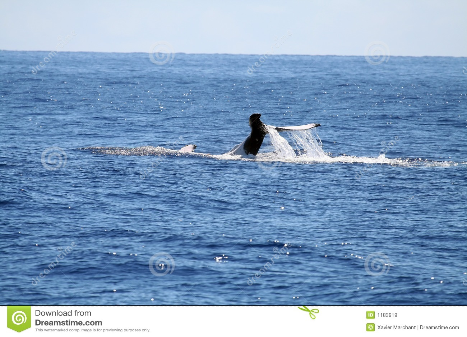 задний кит заплывания s
