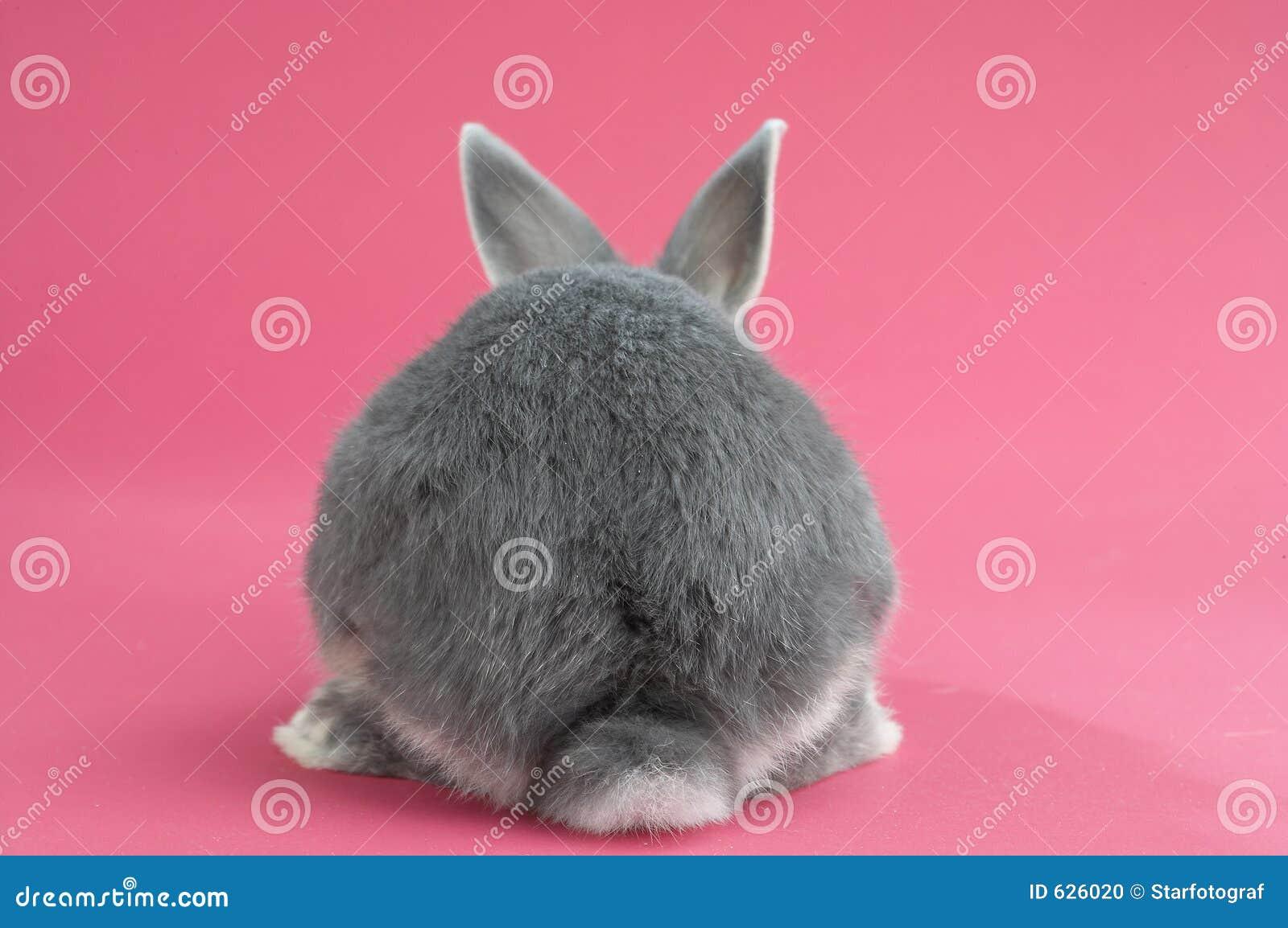 Download задний кролик стоковое фото. изображение насчитывающей грызун - 626020