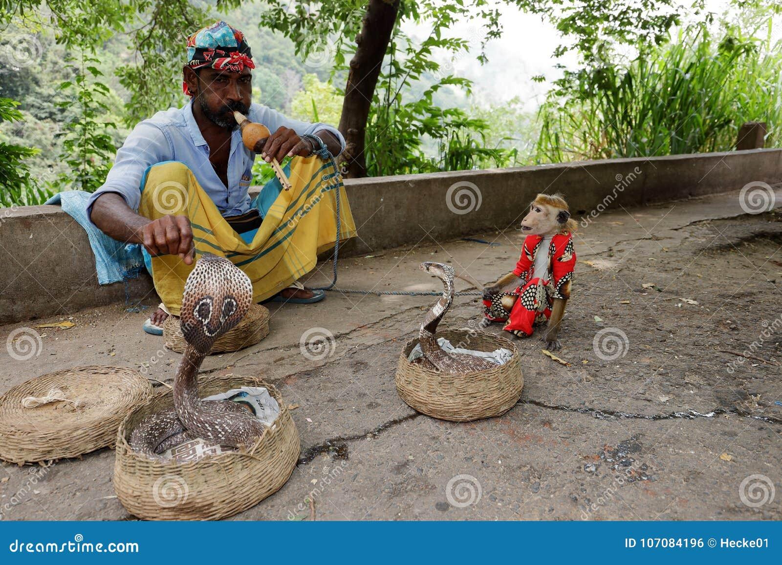Заклинатель змей с коброй в Шри-Ланке