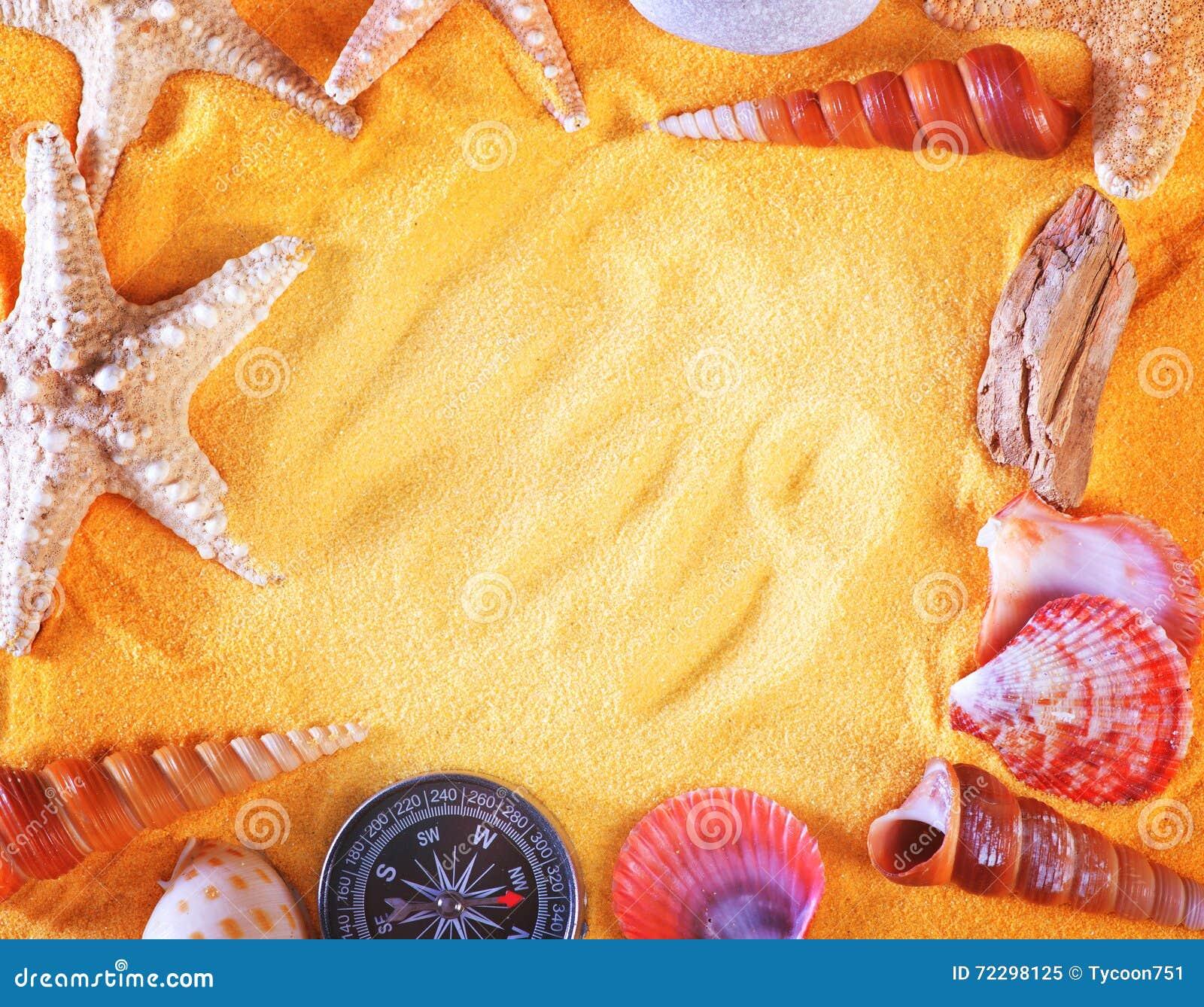 Download закрепляя изолированное море путя обстреливает белизну Стоковое Изображение - изображение насчитывающей экземпляр, echinoderm: 72298125