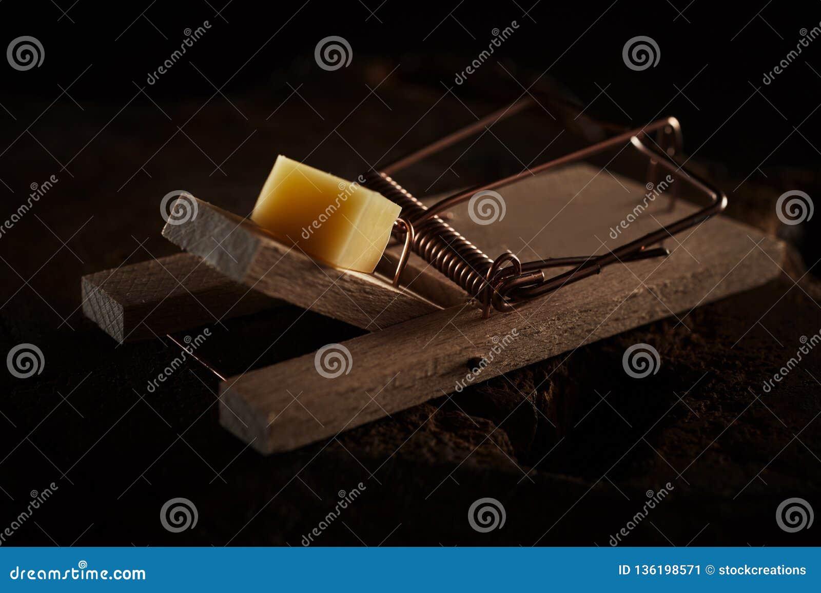 Закройте вверх ловушки мыши затравленной с сыром