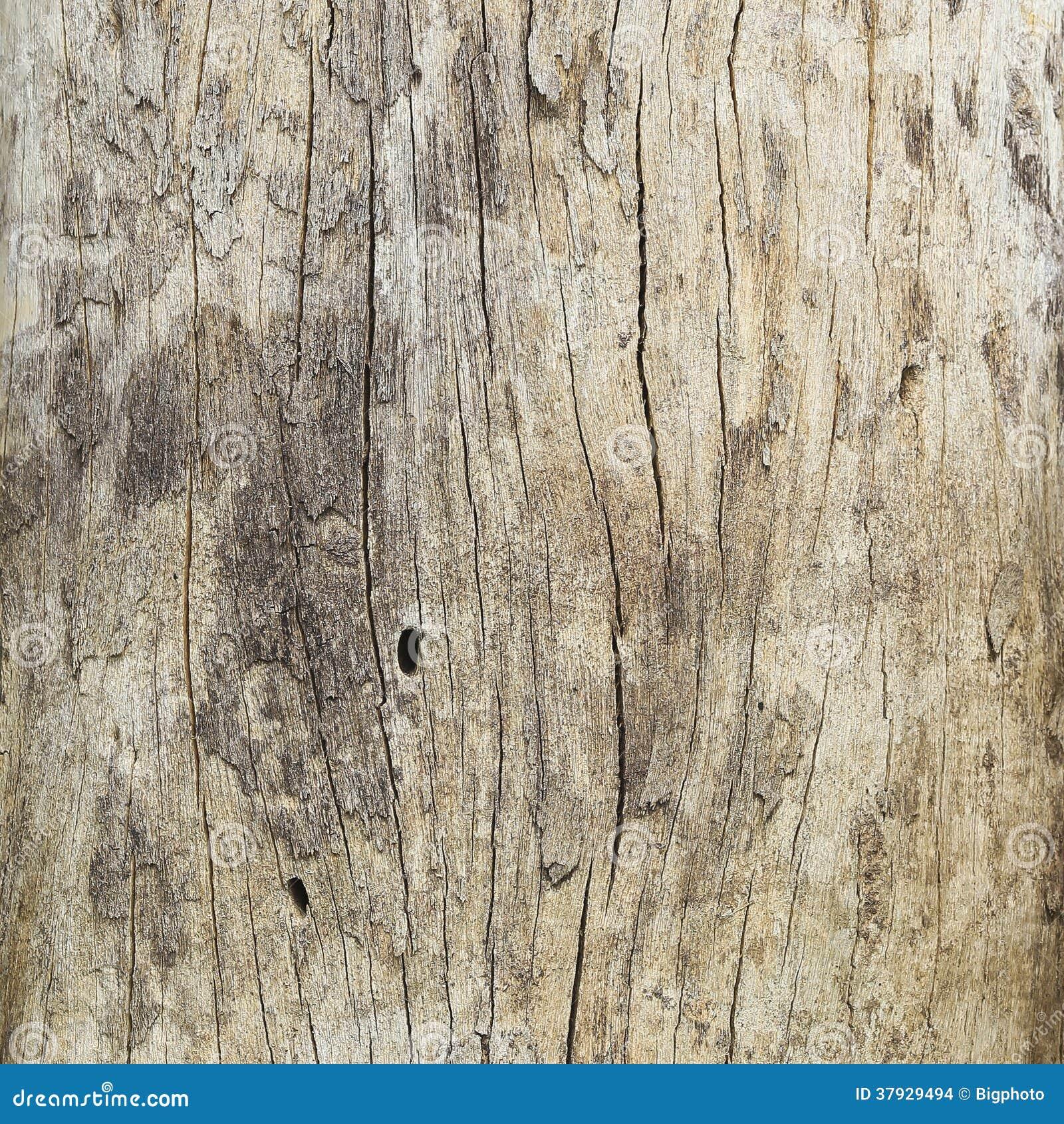 Закройте вверх мертвого ствола дерева