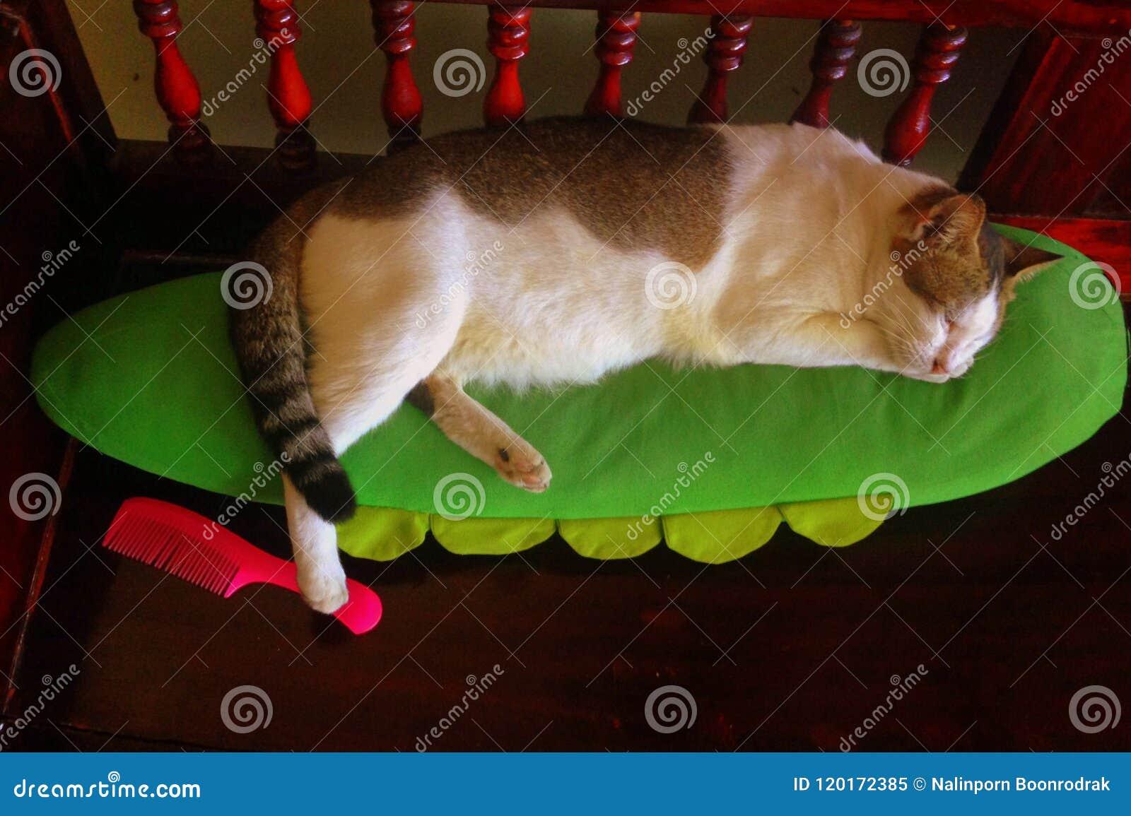 Закройте вверх по коту ситца спать счастливо на зеленой подушке при одна нога шагая на розовый гребень