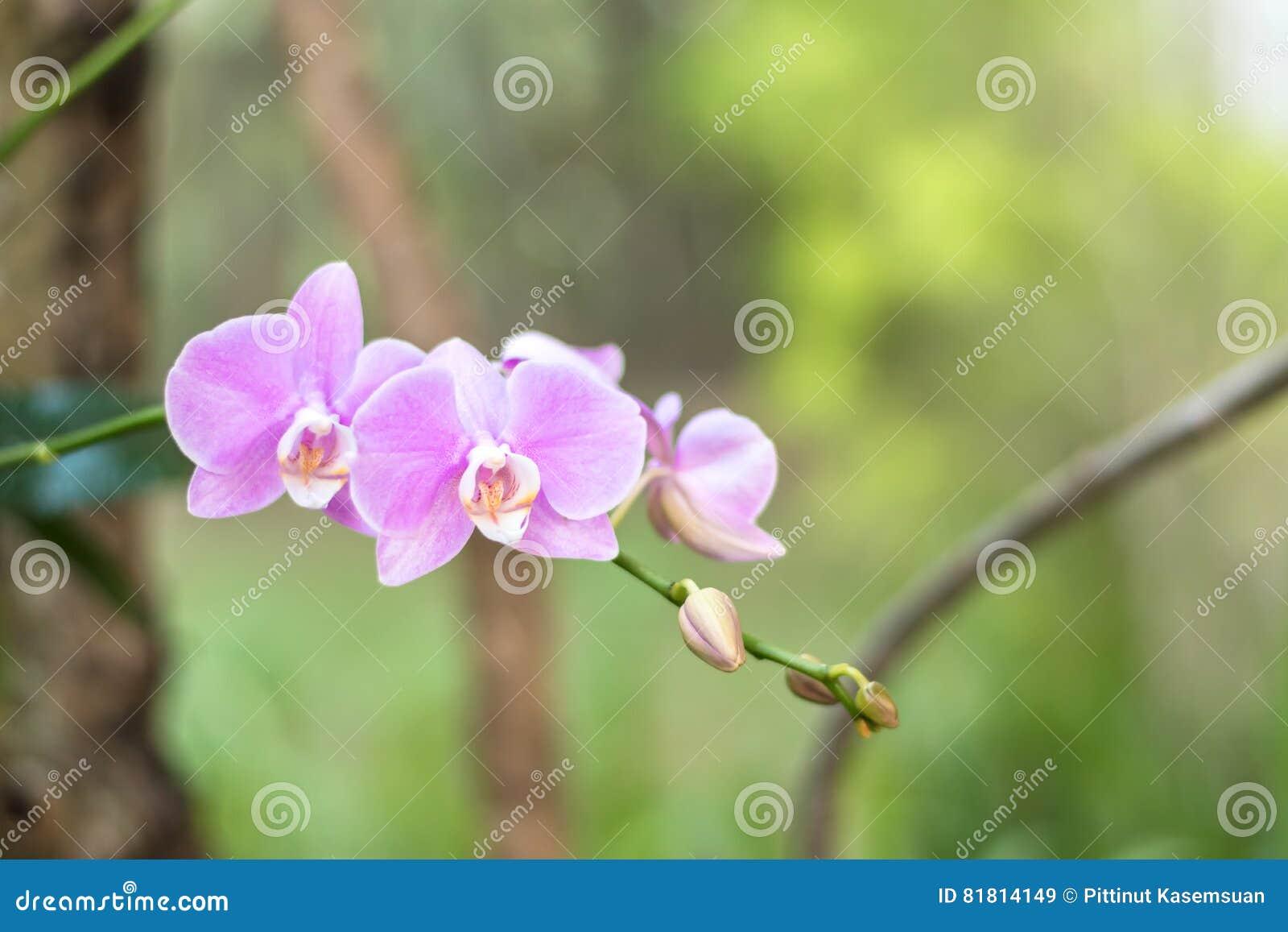 Закройте вверх по красивому белому цветку орхидеи природы