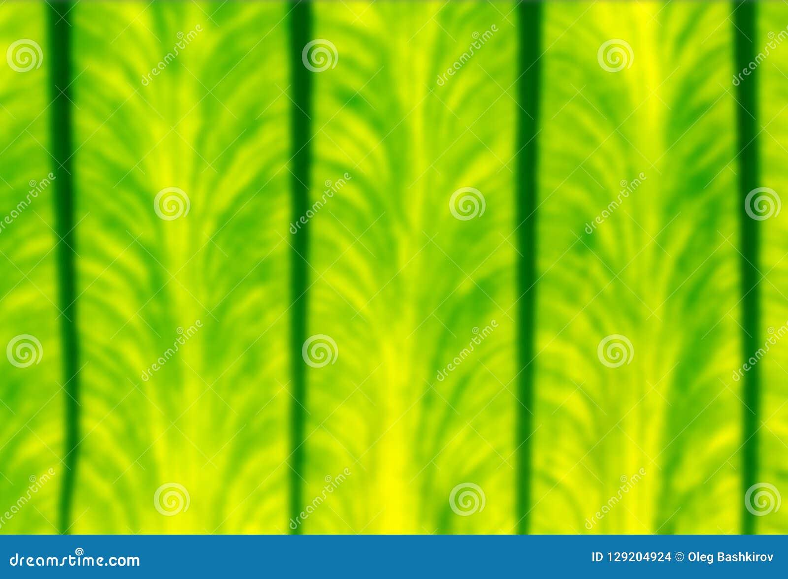 Закройте вверх по defocused красивой предпосылке текстуры лист зеленого цвета природы