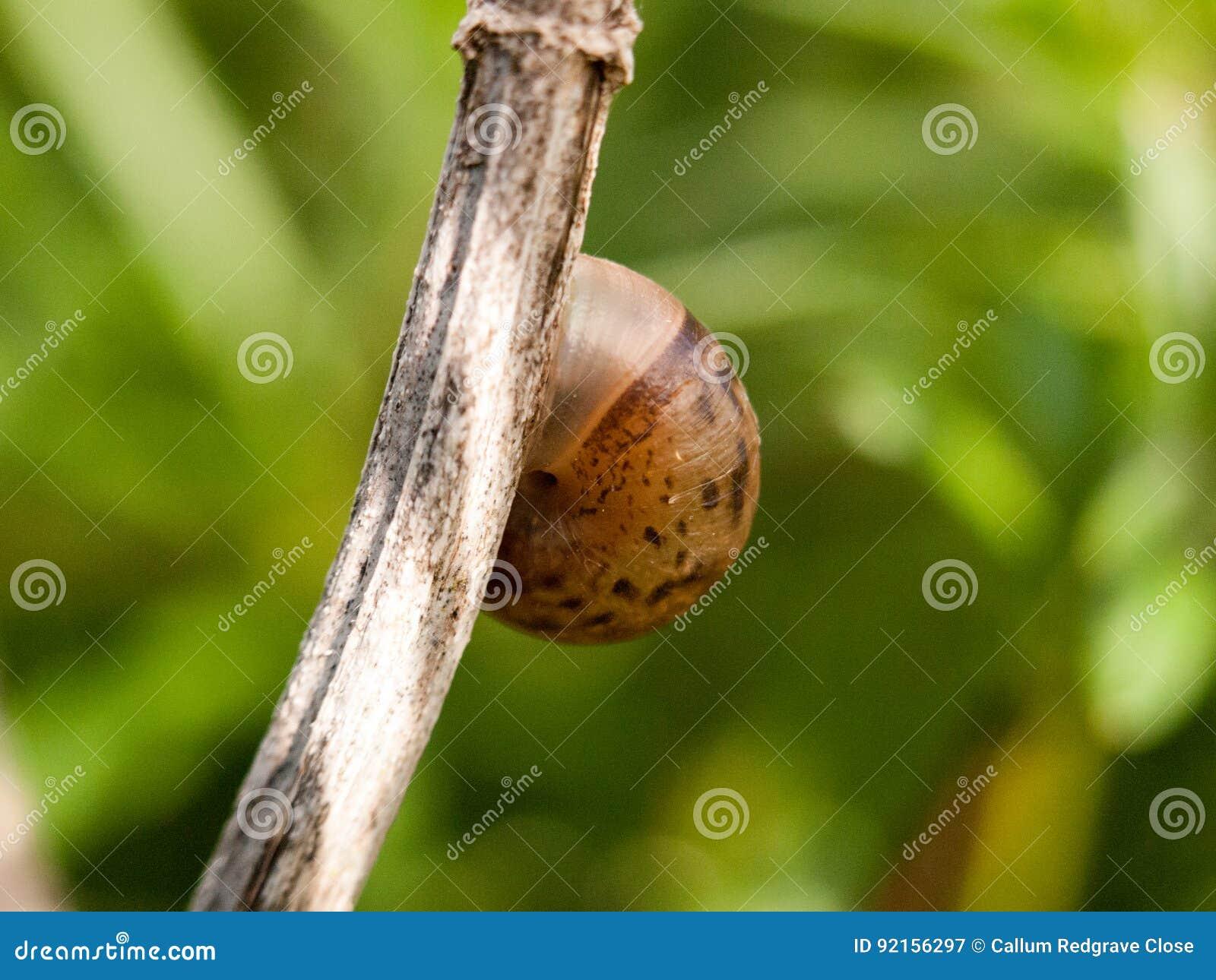 Закройте вверх снаружи раковины прикрепленного к iso коричневого цвета ветви пустому