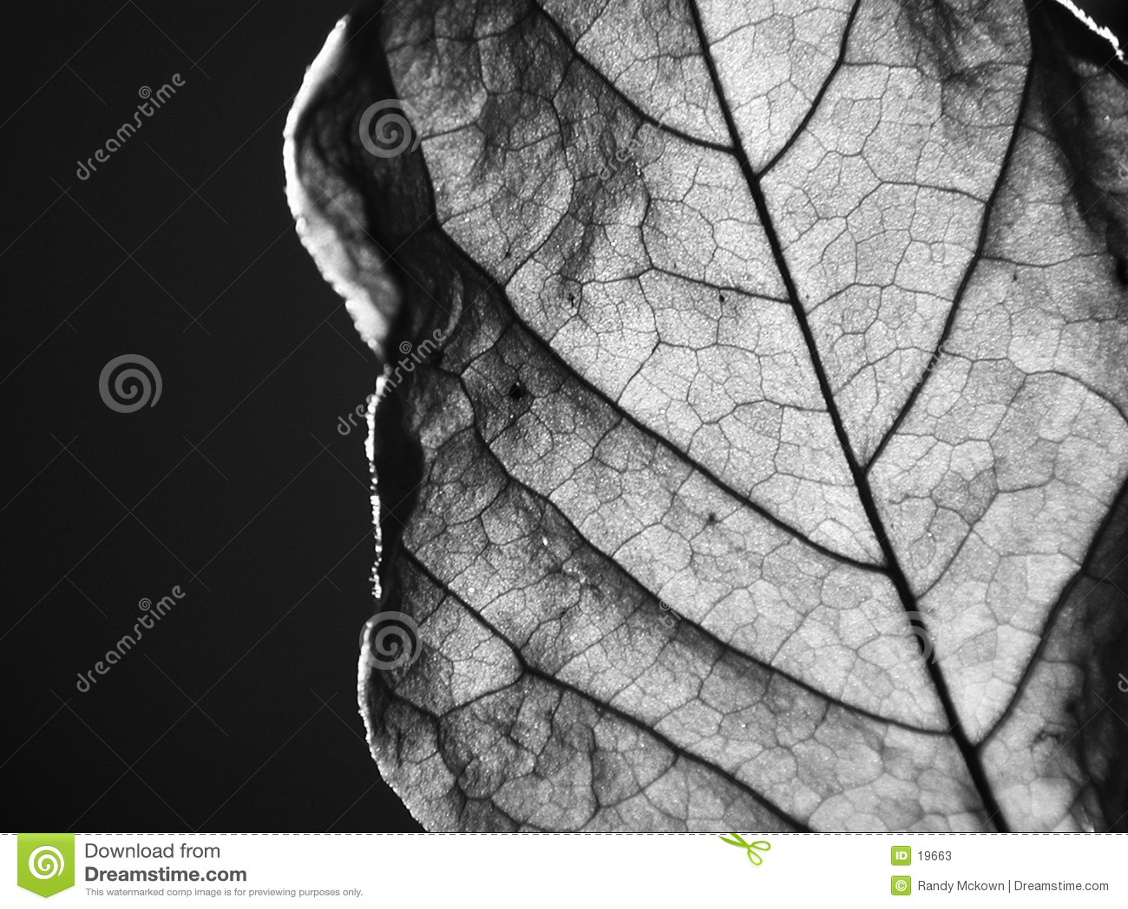 закройте высушенные листья вверх