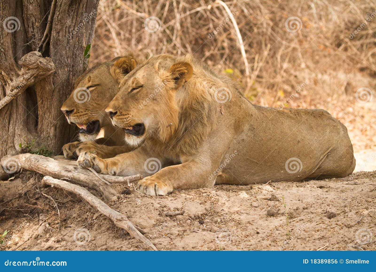 Замбия сафари