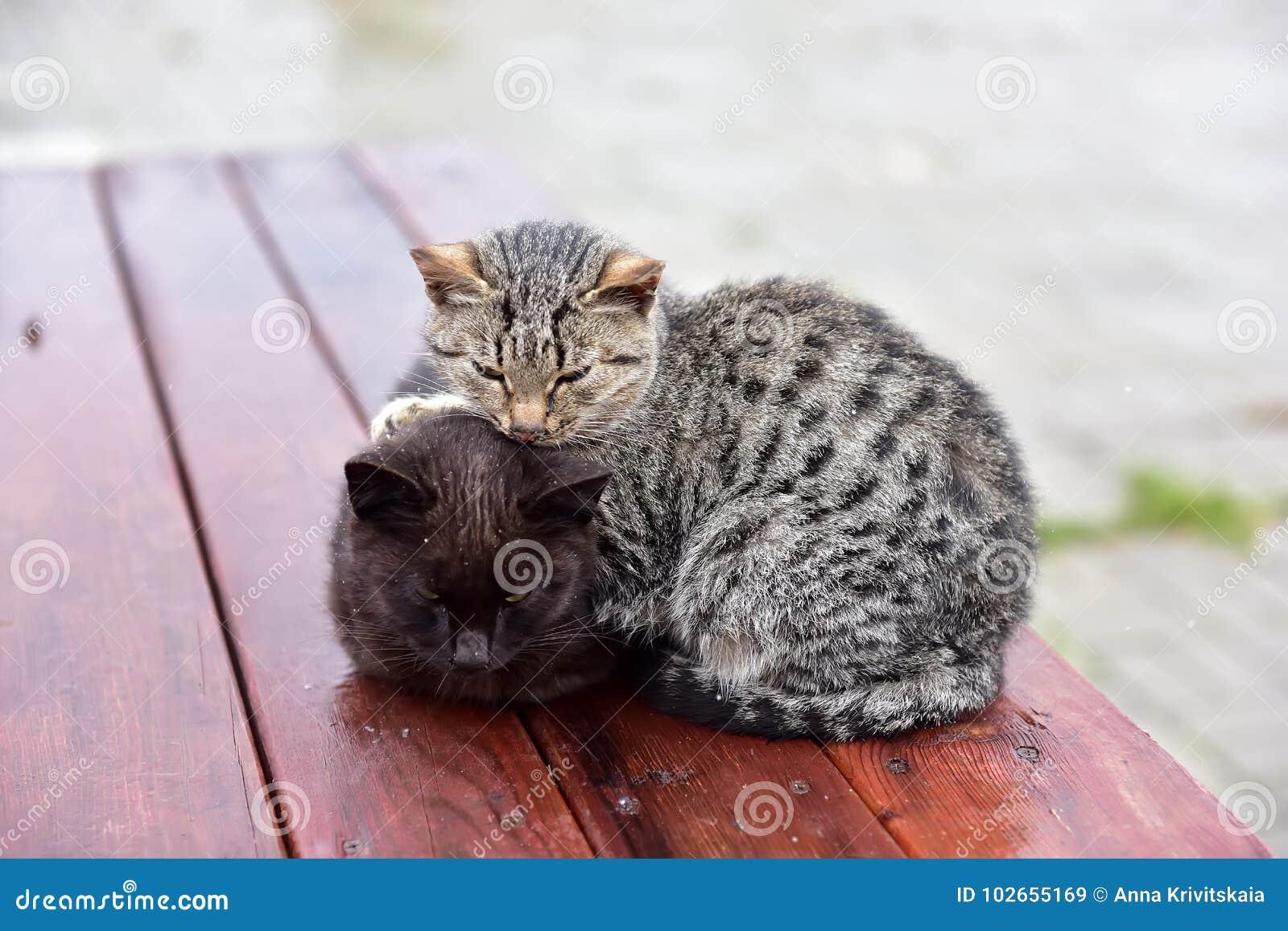 Замораживание котят на улице