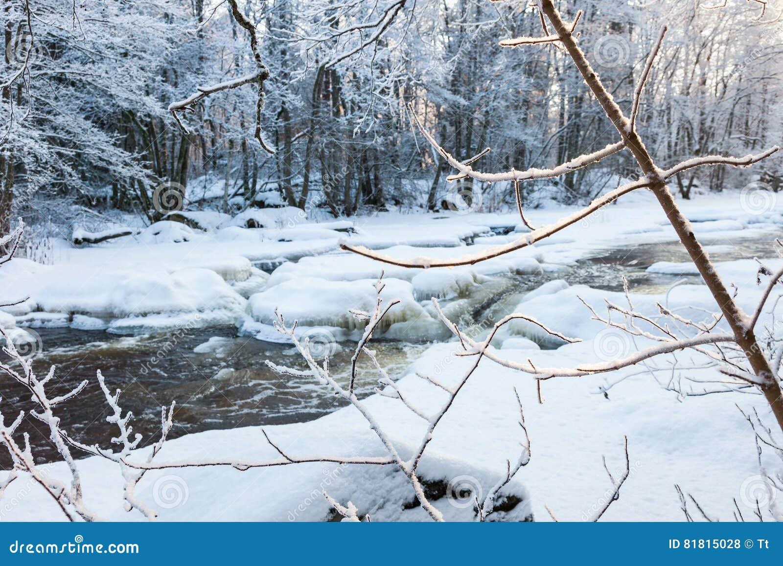 Замороженные ветви дерева на реке