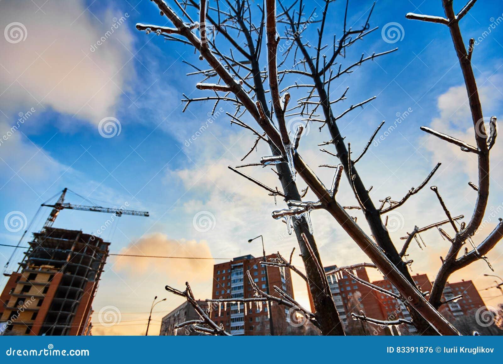 Замороженный над деревьями на заднем плане города зимы