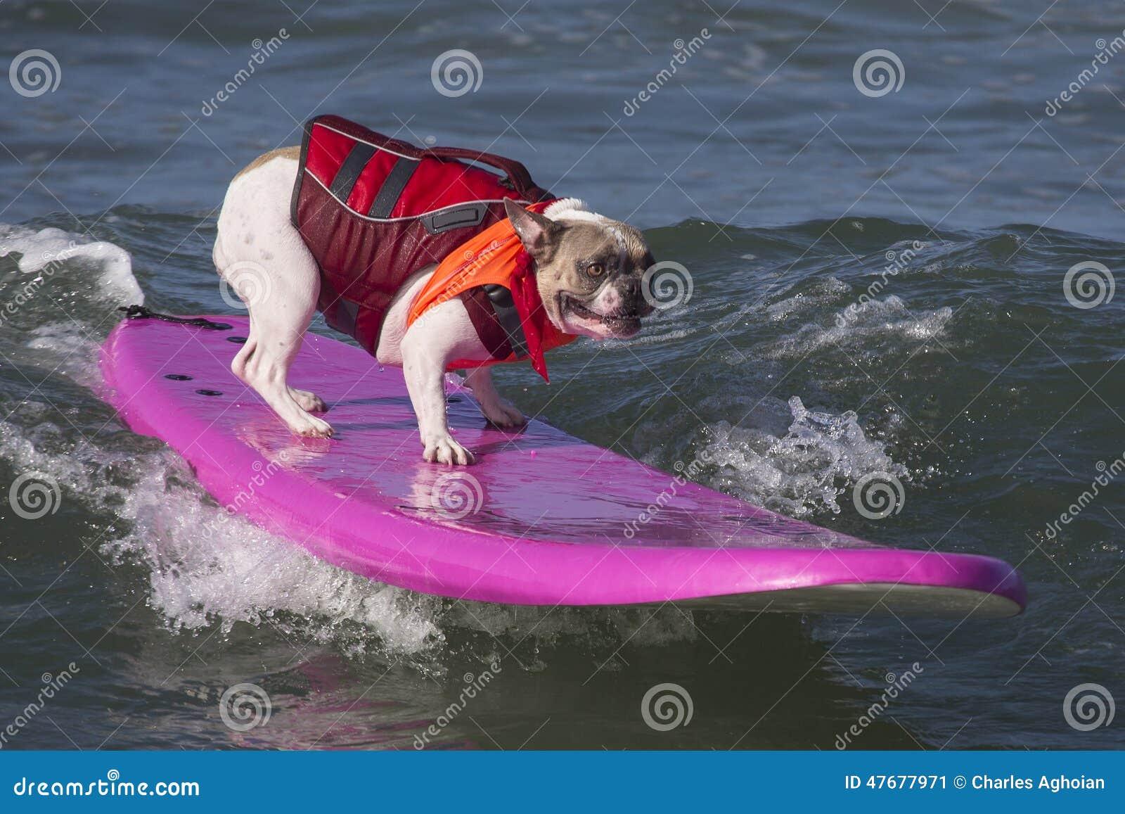 Занимаясь серфингом собака