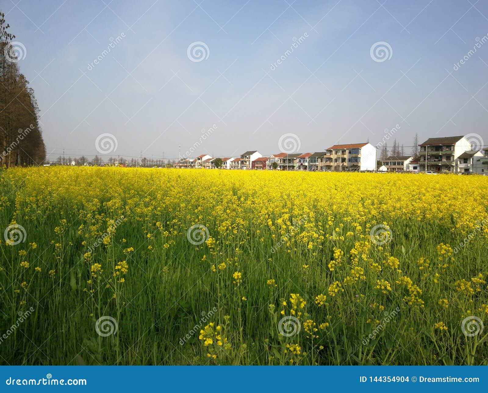 Запах весны в сельской местности